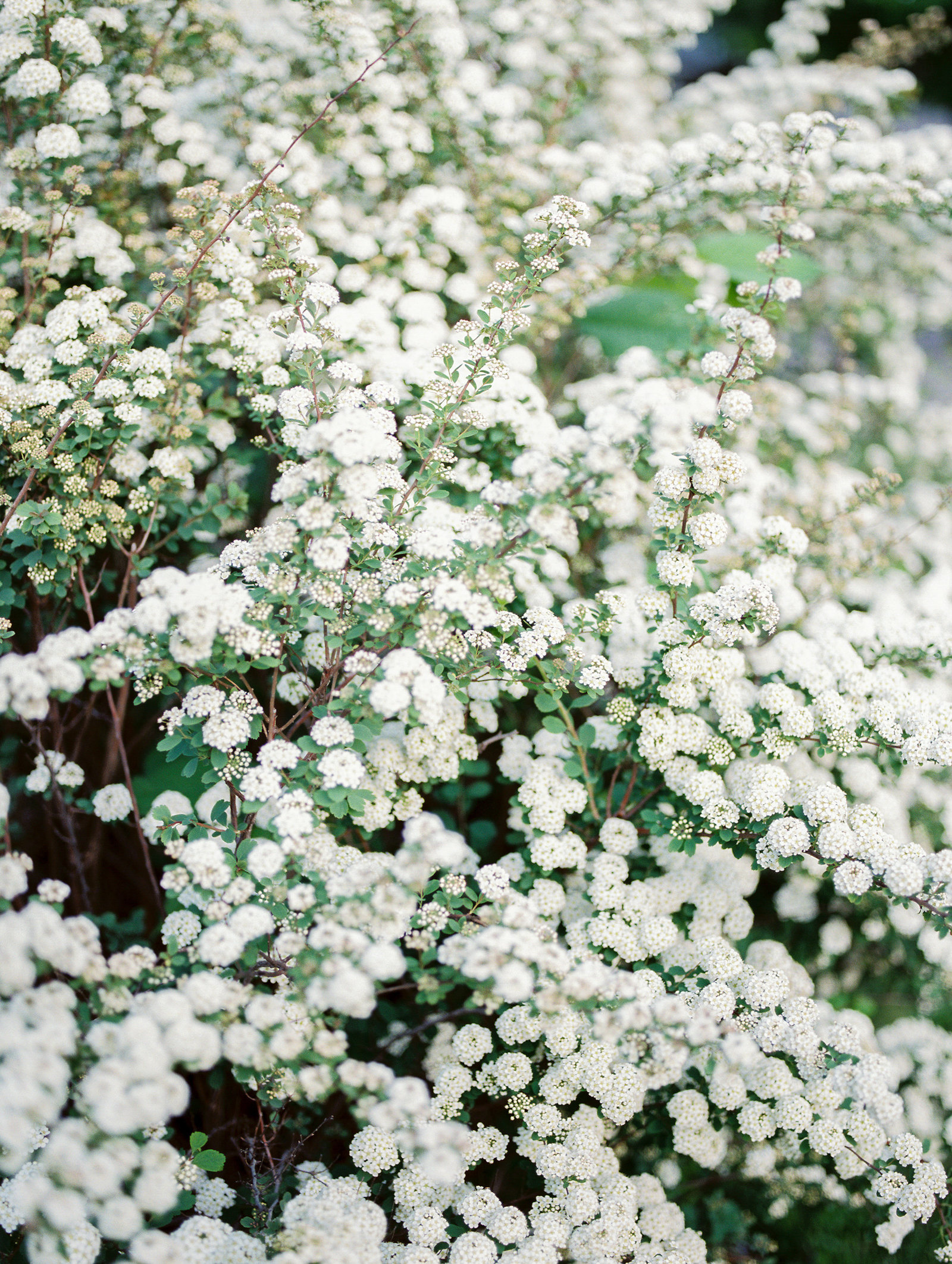 Film Photography Flowers for Wedding