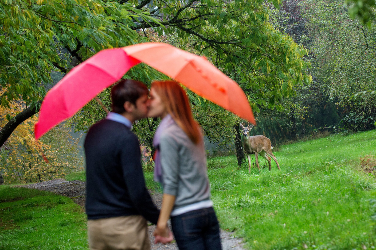 a couple kiss underneath colorful umbrellas as a deer looks on in the background for their engagement