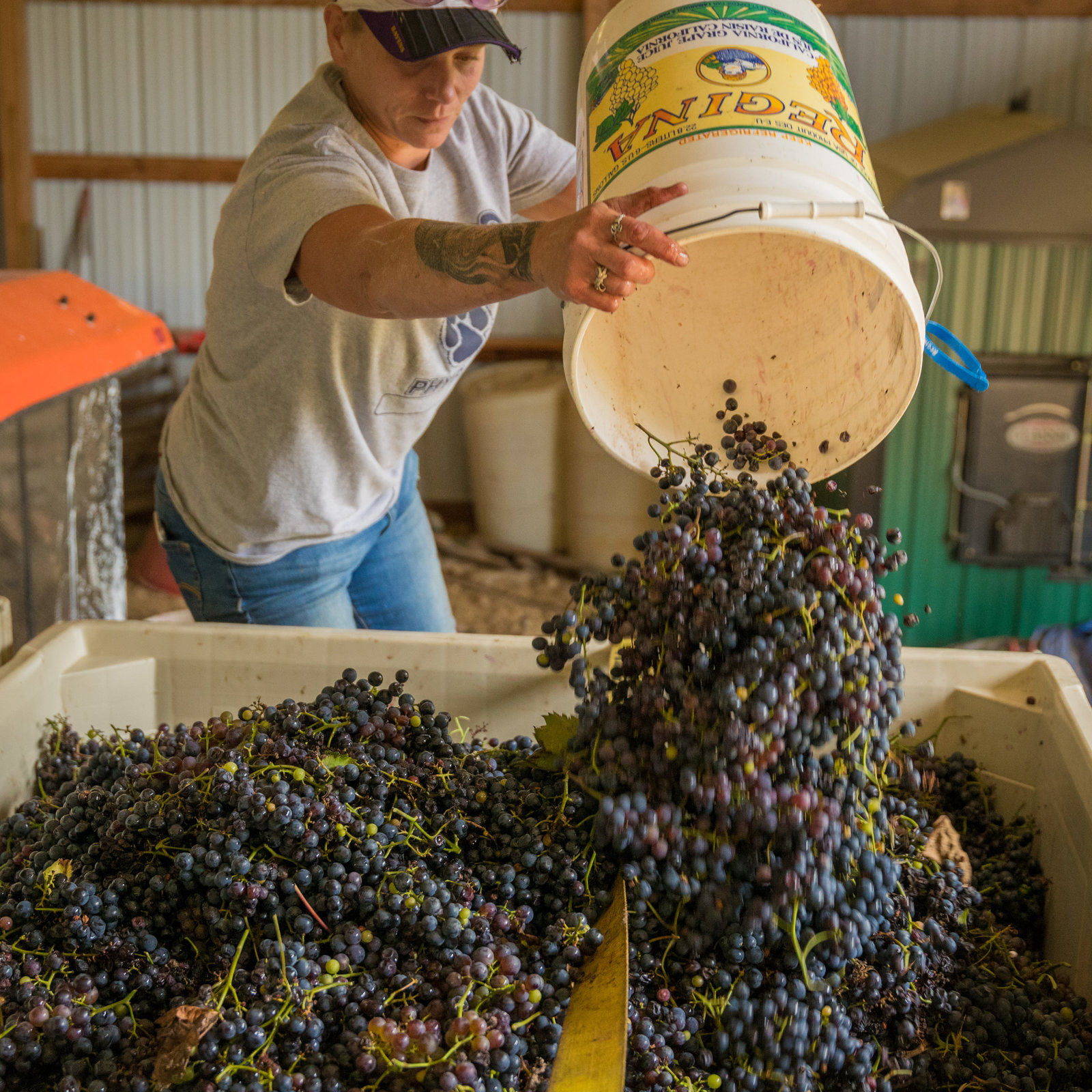Galena Cellars Harvesting 021