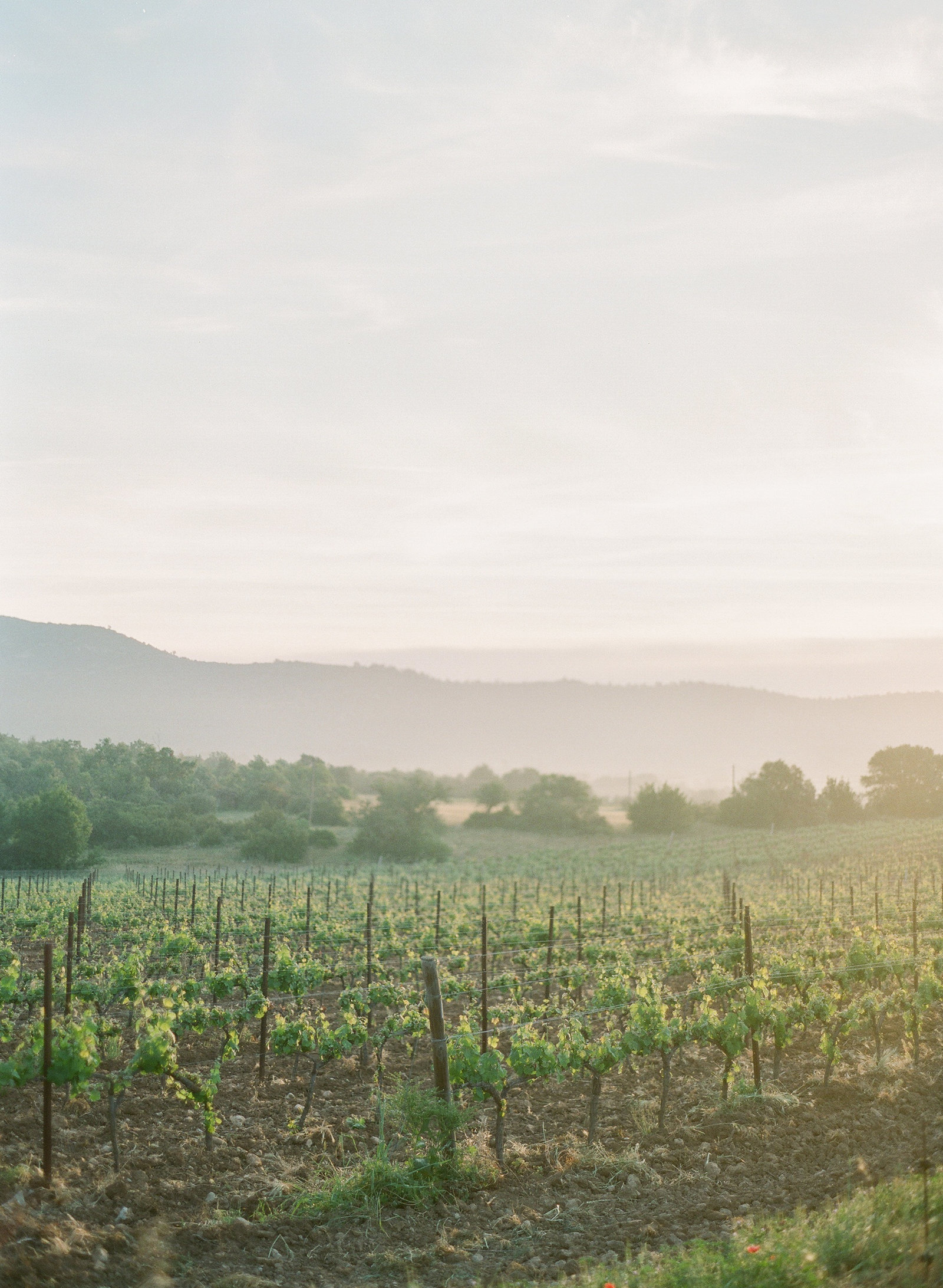 Provence vineyard. Provence sunrise. French countryside.Paris wedding photographer. Paris wedding photography. France wedding photographer. Paris destination wedding.