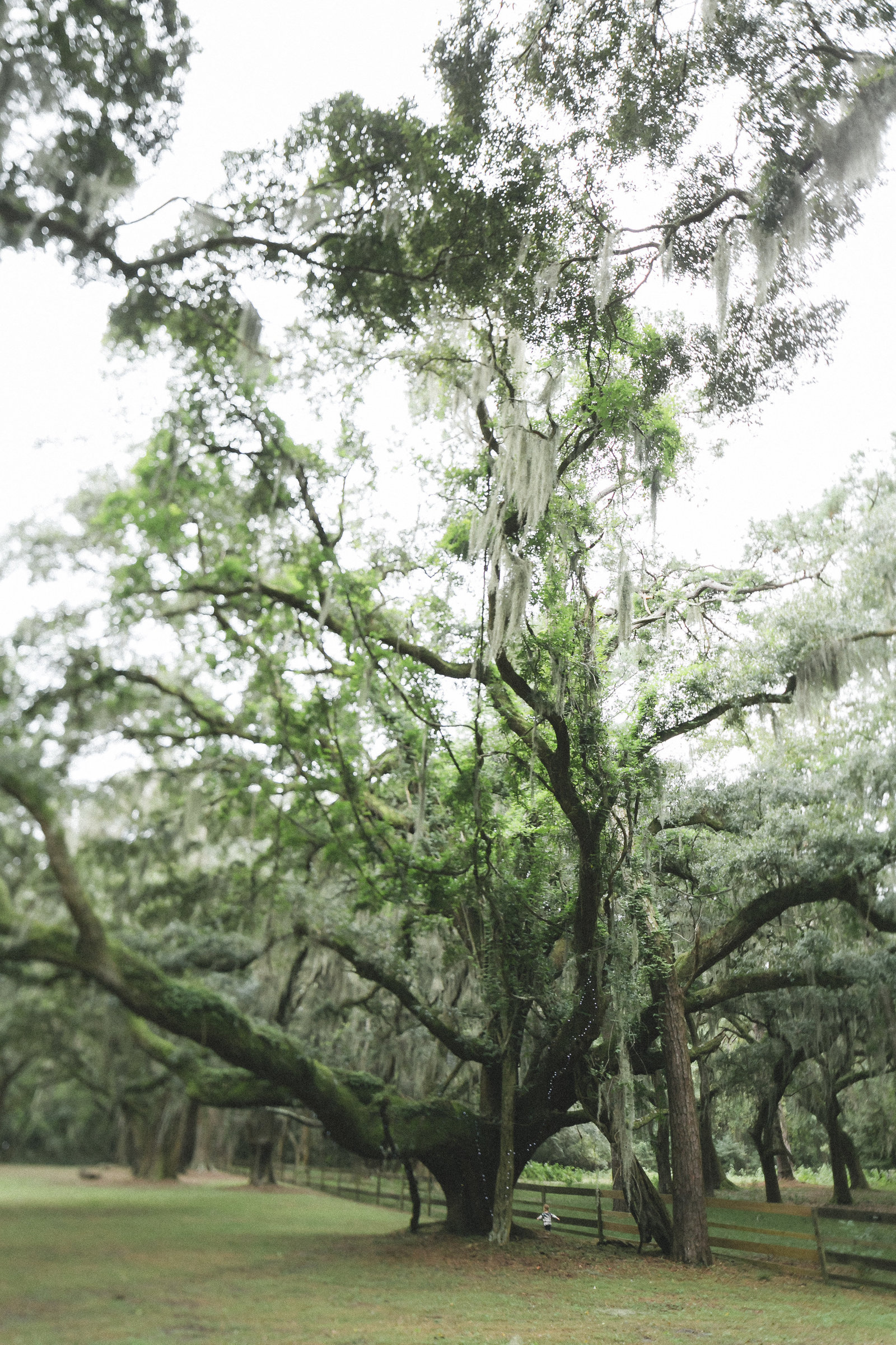 Savannah Georgia - DiBlasio Photo-0137
