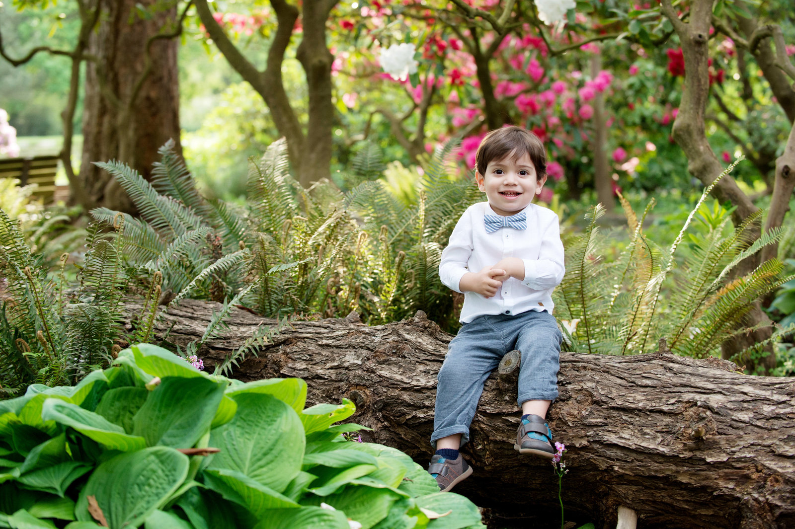 a cute boy in a bow tie laughs as he sits on a fallen log at crystal springs rhododendron garden