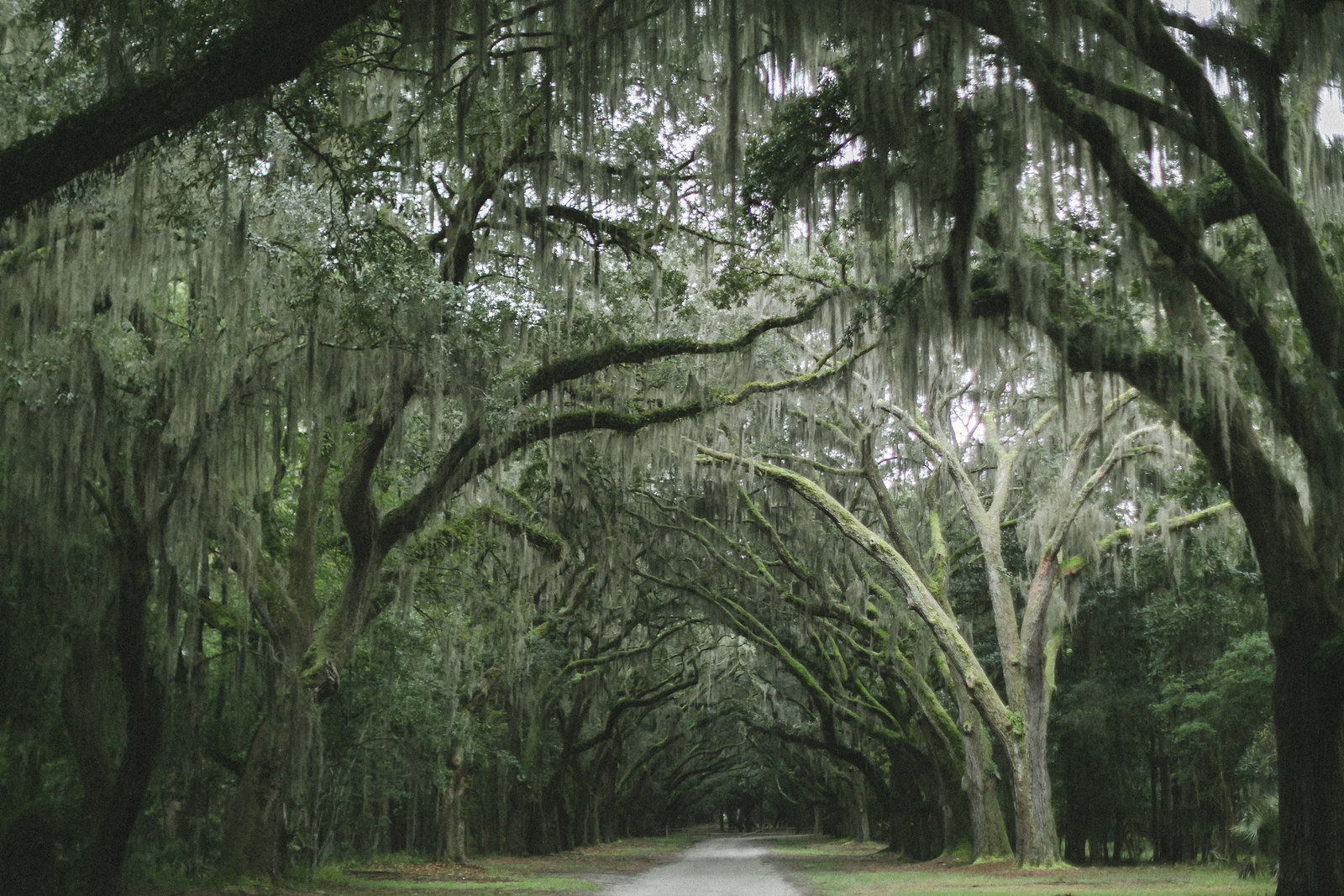 Savannah Georgia - DiBlasio Photo-0117