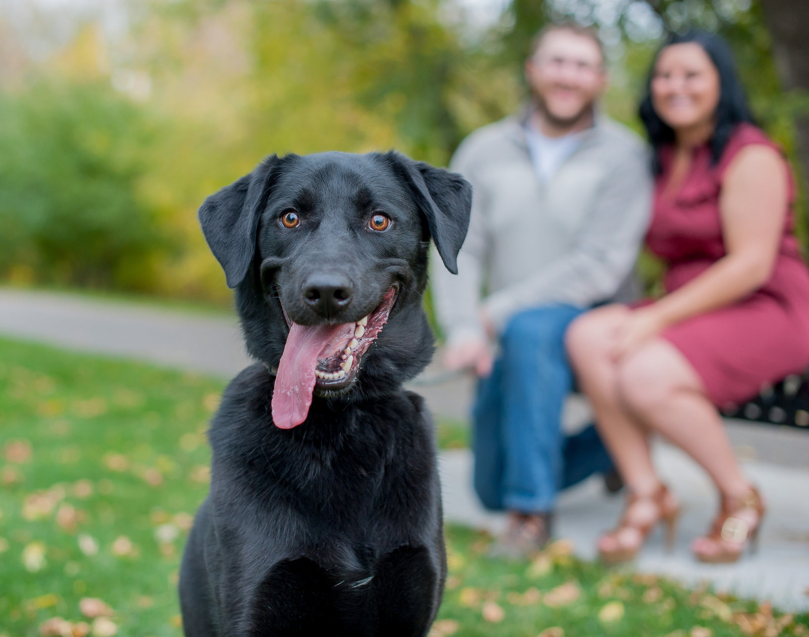 Engagement sessions with Pets Kriskandel