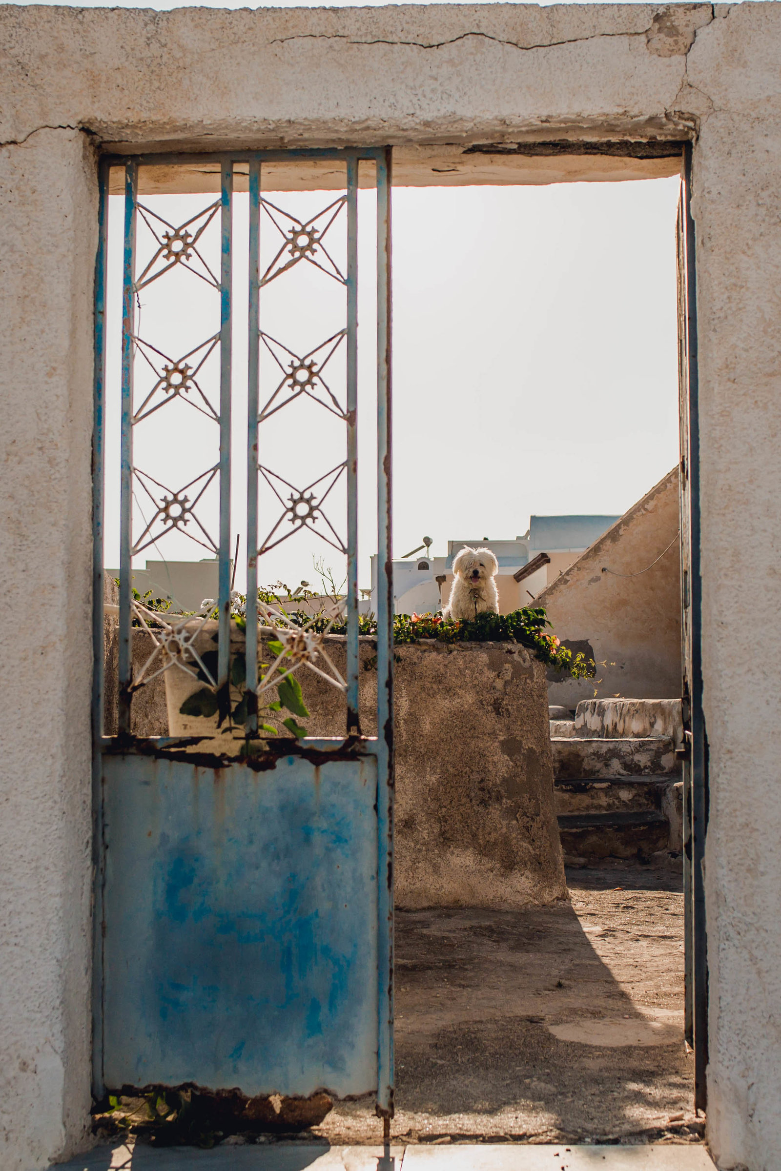 dog-yard-destination-travel-santorini-wedding-kate-timbers-photo-2641