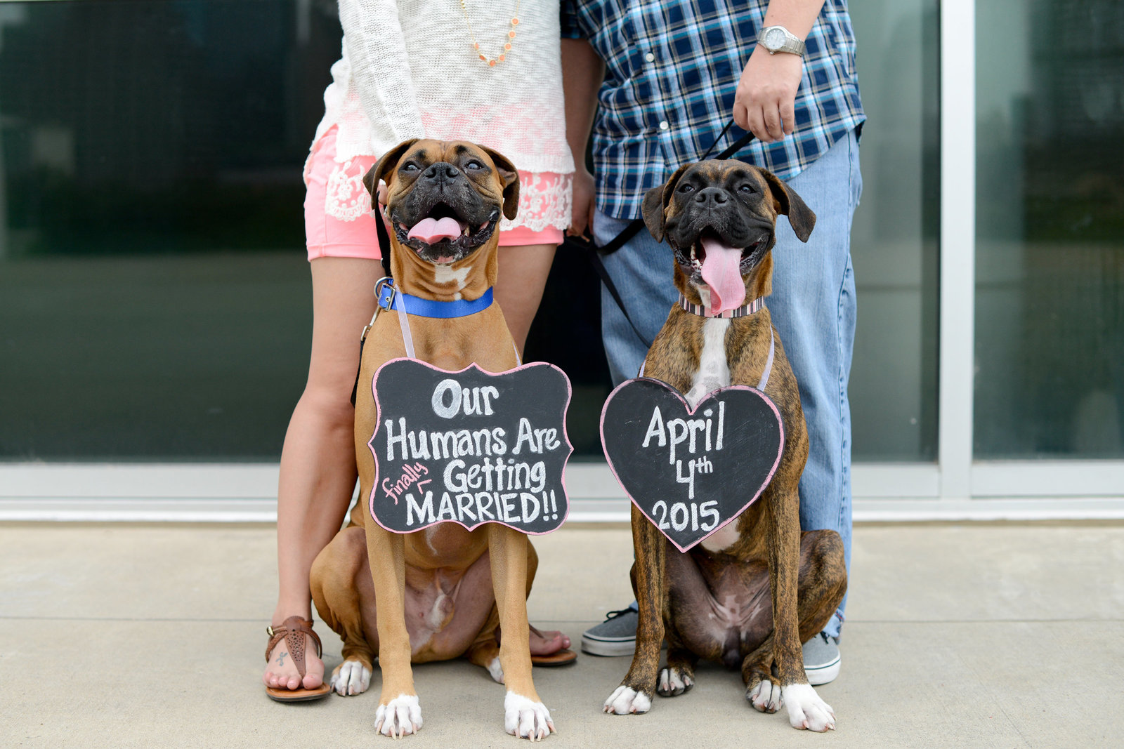 Dog Save the date Engagement Ideas