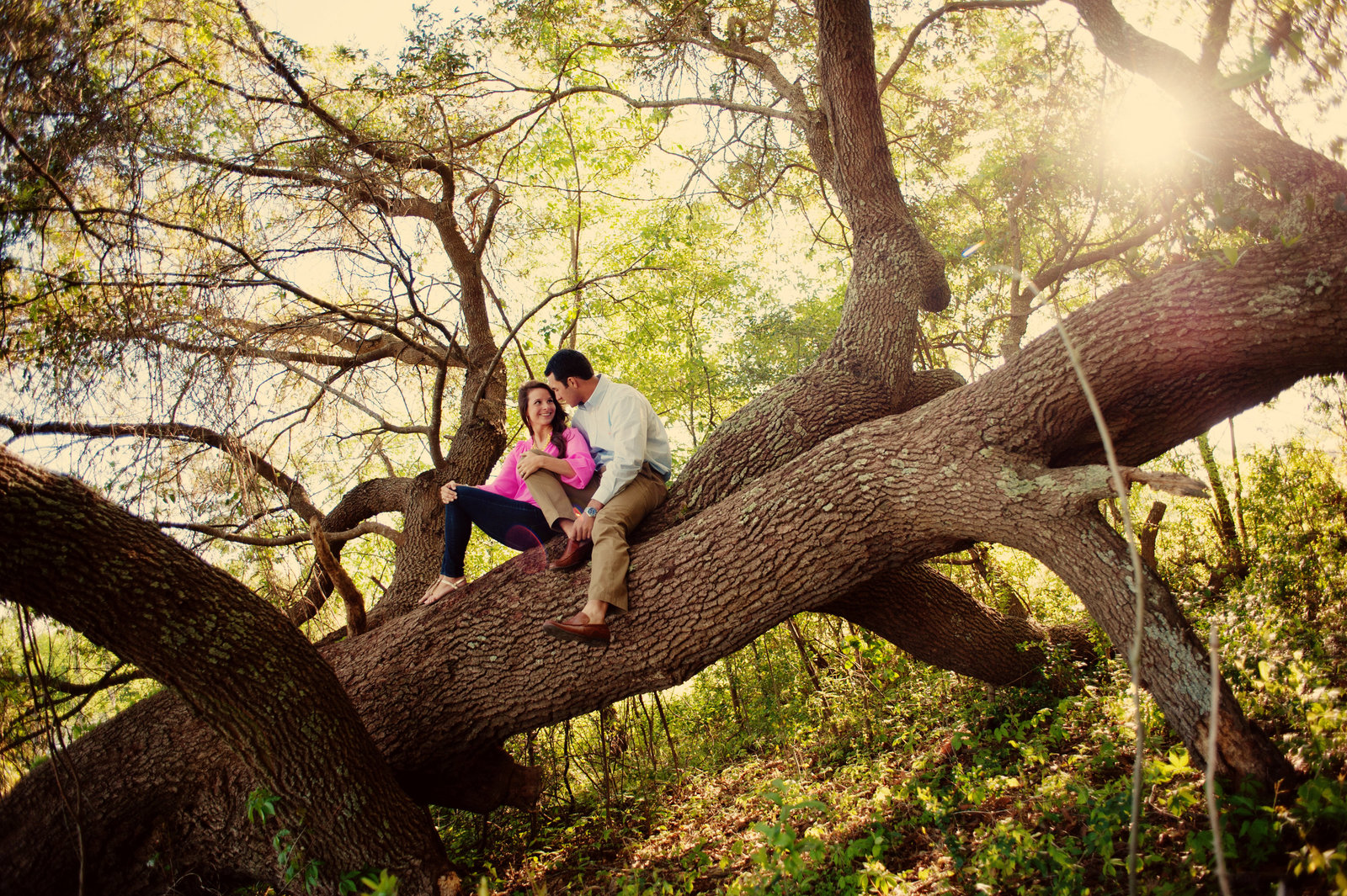 an engagement photo of a couple in a giant oak tree