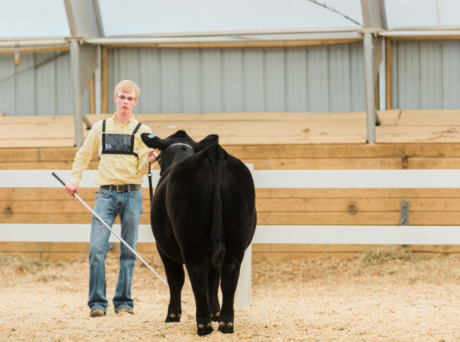 Livestock-Photographer-Stock-Show-PHotos-by-Carrie-B-Joines