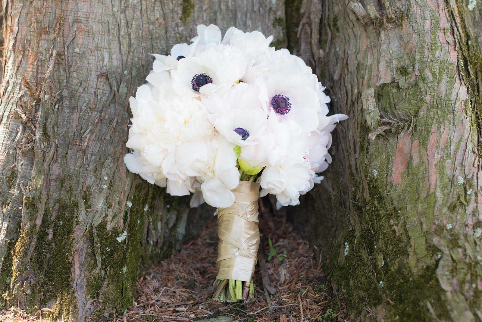 White Anemone Bridal Bouquet at base of tree photo
