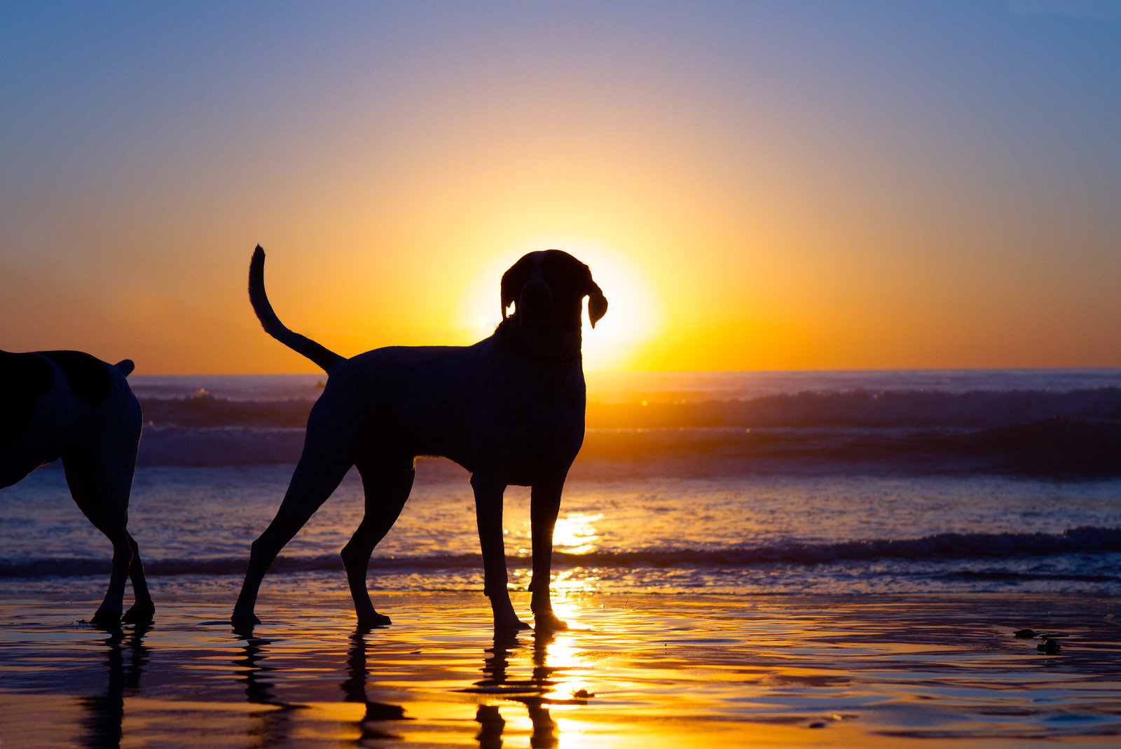 Sunset silhouette photo of a dog on the beach