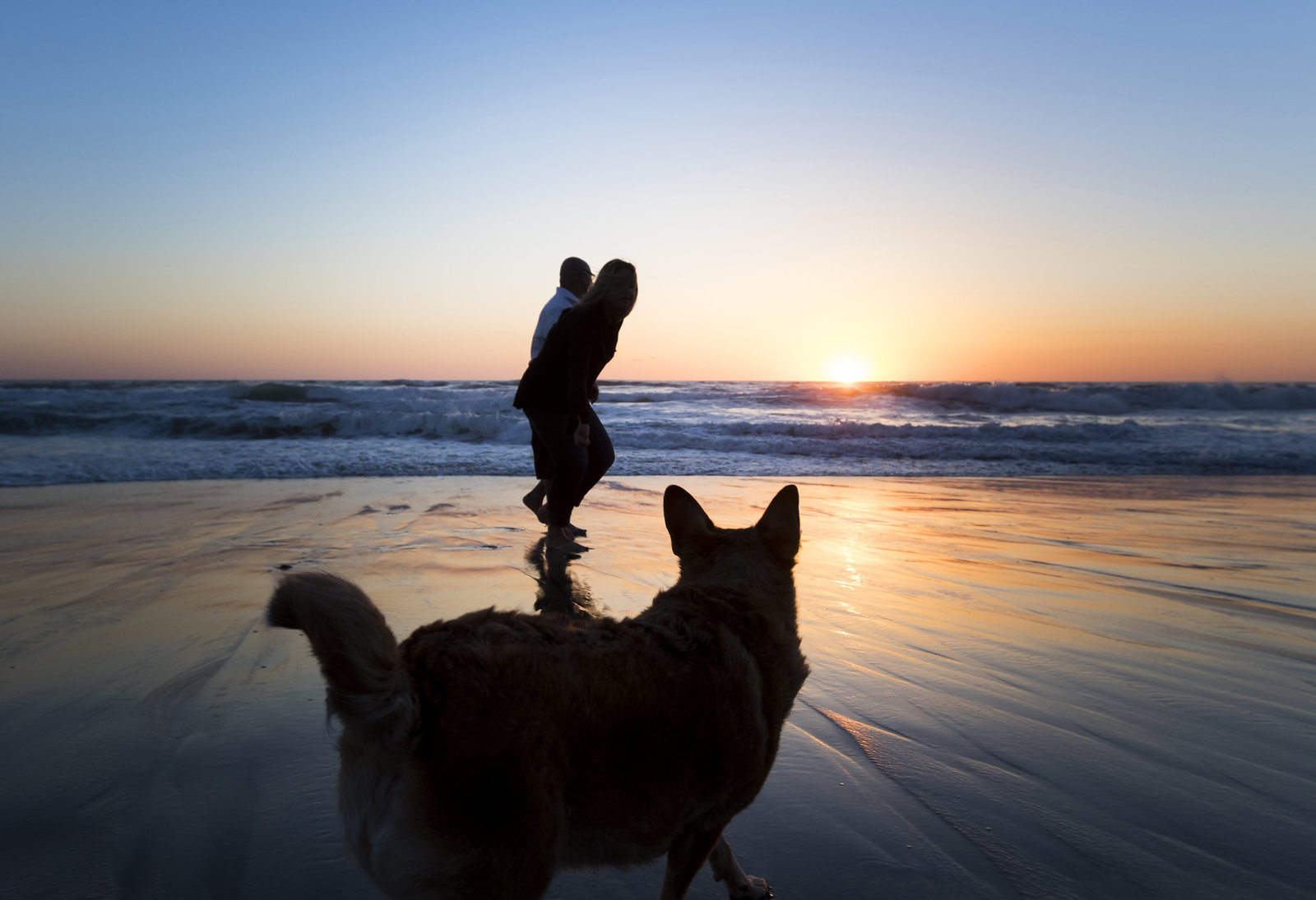 great_san_diego_dog_pics