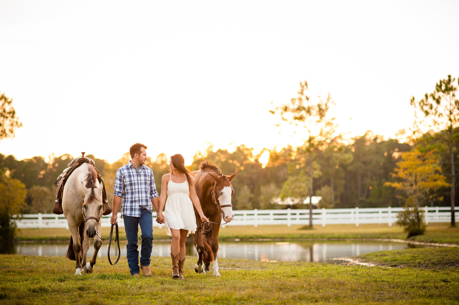 Horse Portraits Ocala