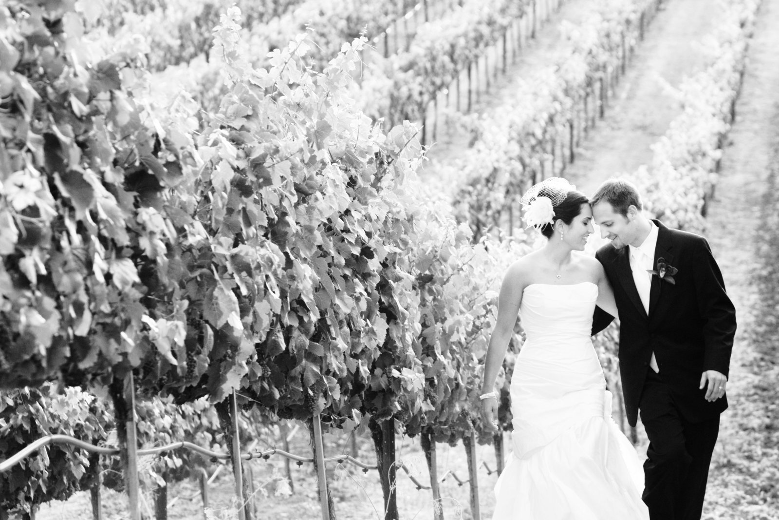 wine country wedding, bride and groom, Jennifer Baciocco Photography