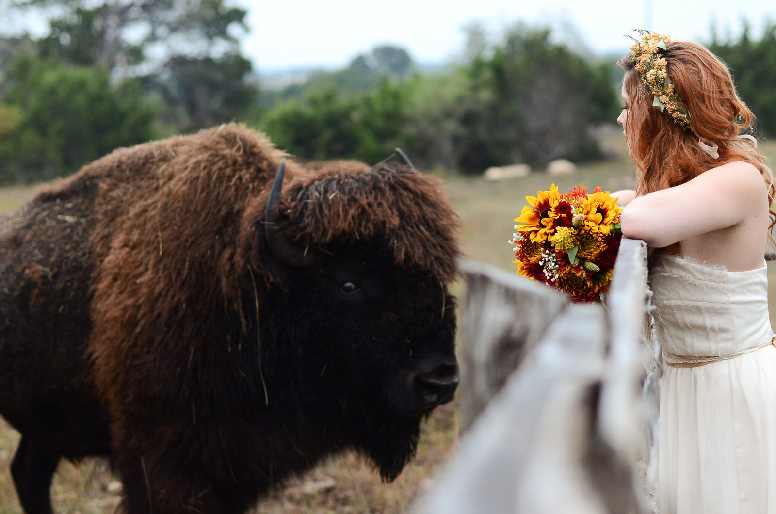 Fall bride with sunflower wedding bouquet and floral crown faces off with a Buffalo at Twisted ranch wedding