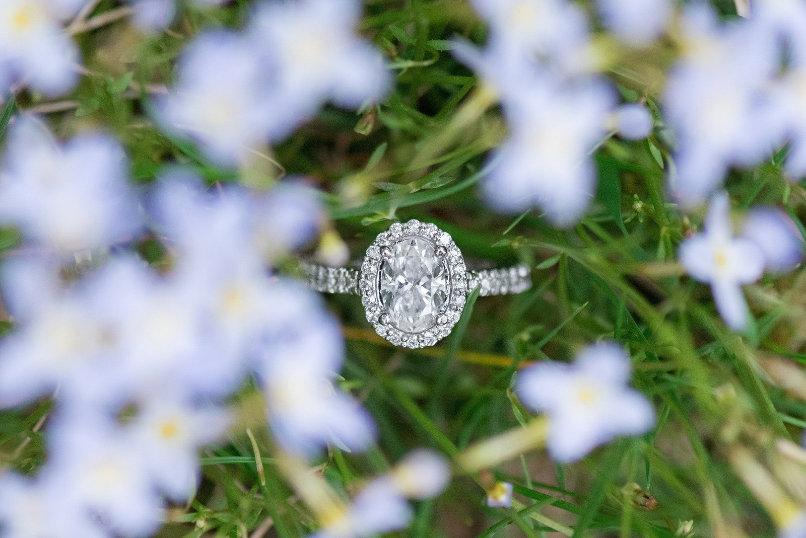 Oval Diamond with halo Engagement Ring in light blue flowers photo