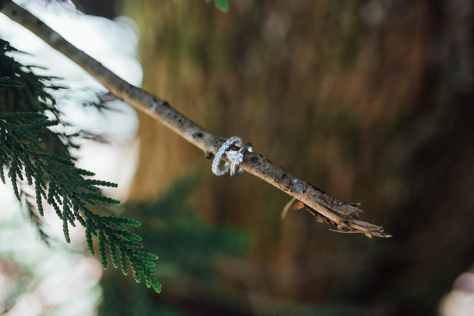 Ring shot in the woods of Franklin Falls in Seattle, WA