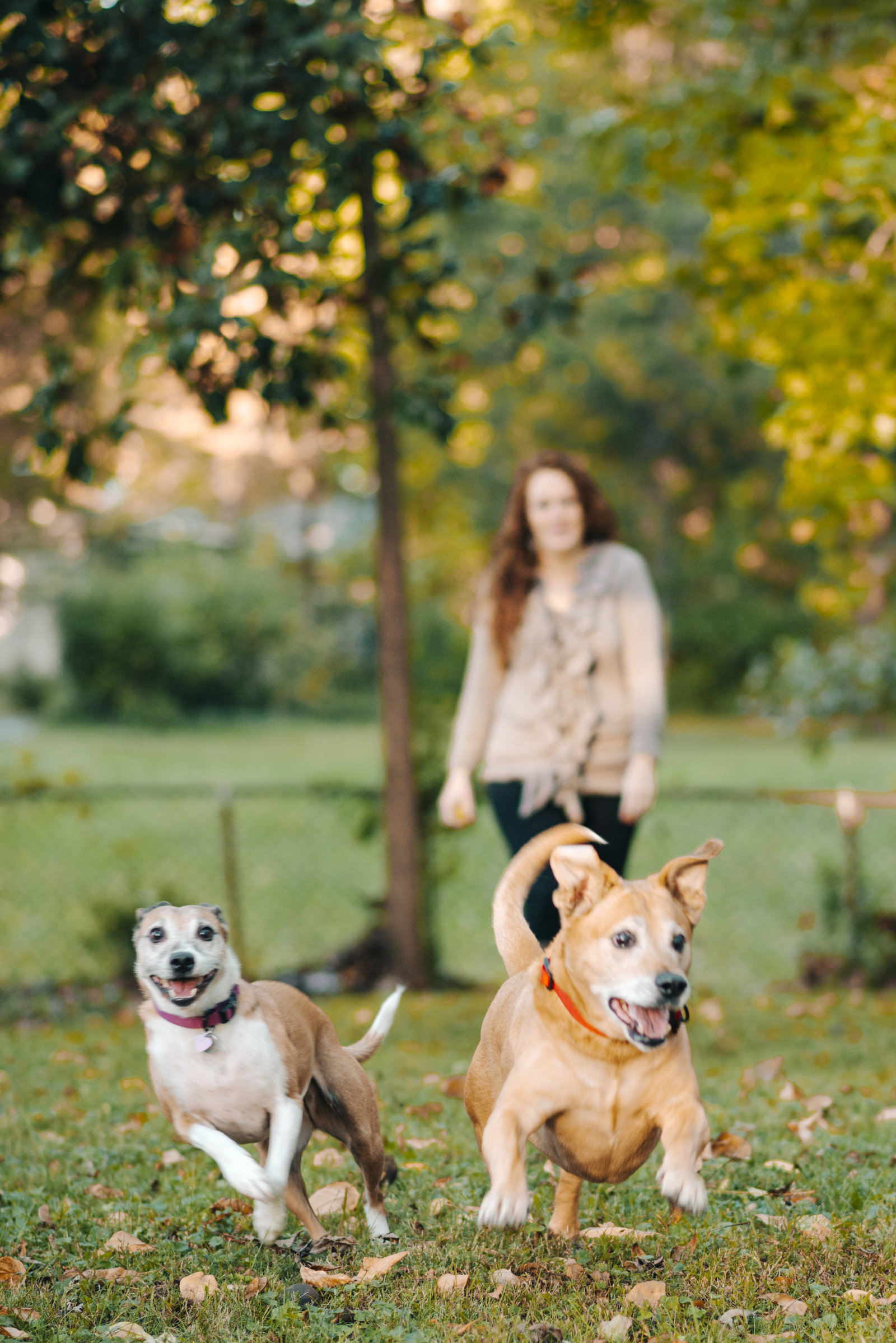 B.loved Images_Melissa + Pups_0046