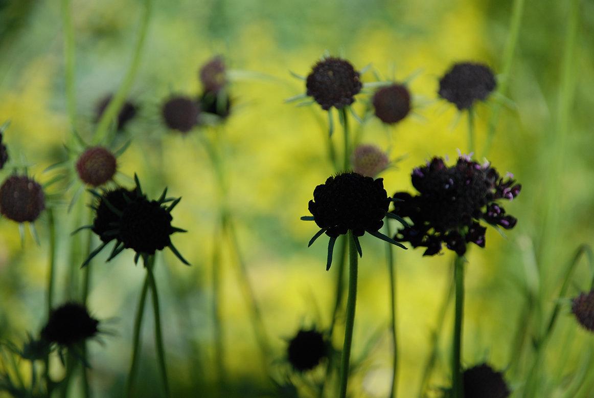 healdsburg banner flowers