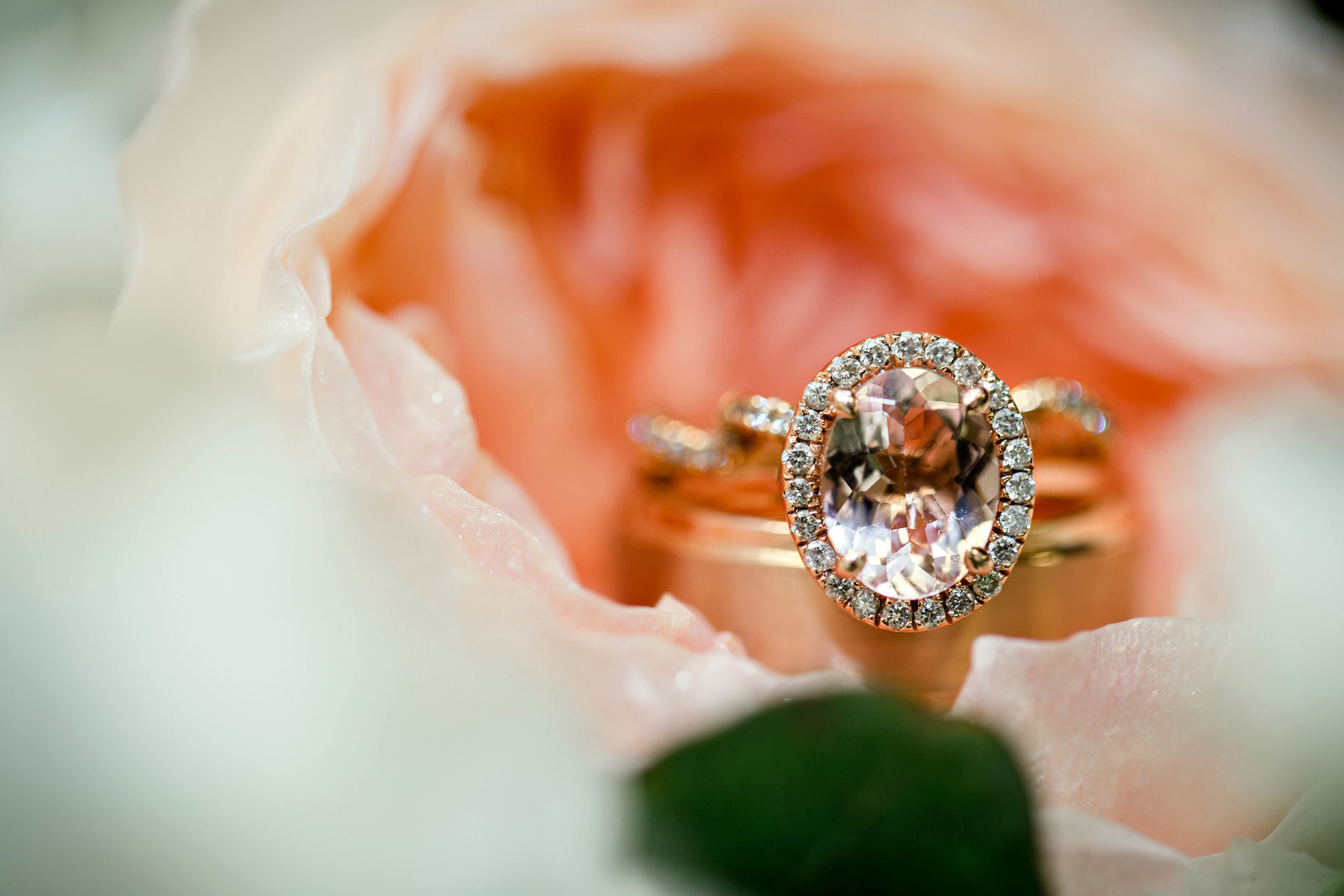 Gorgeous rose gold ring sitting in a pink flower by Knoxville Wedding Photographer, Amanda May Photos.