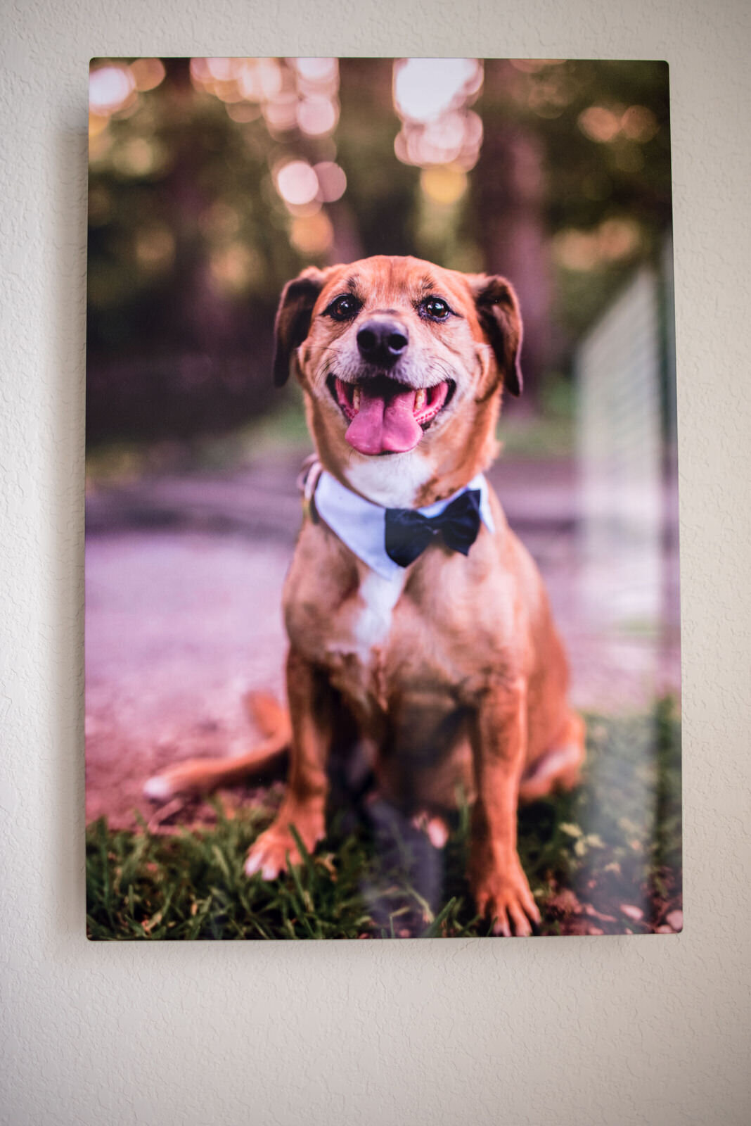 FabFur_PetPhotography_Products-1720