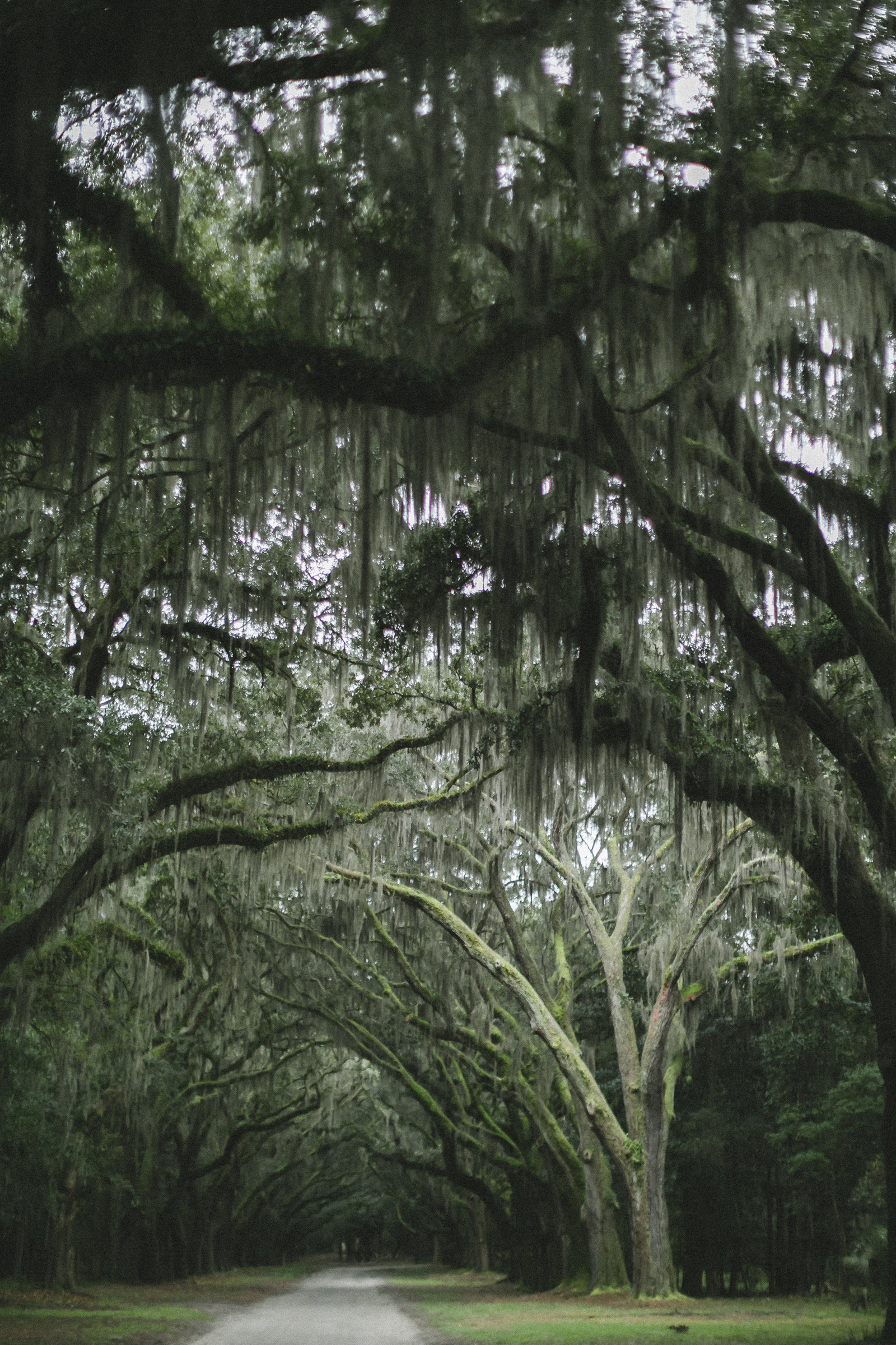 Savannah Georgia - DiBlasio Photo-0116