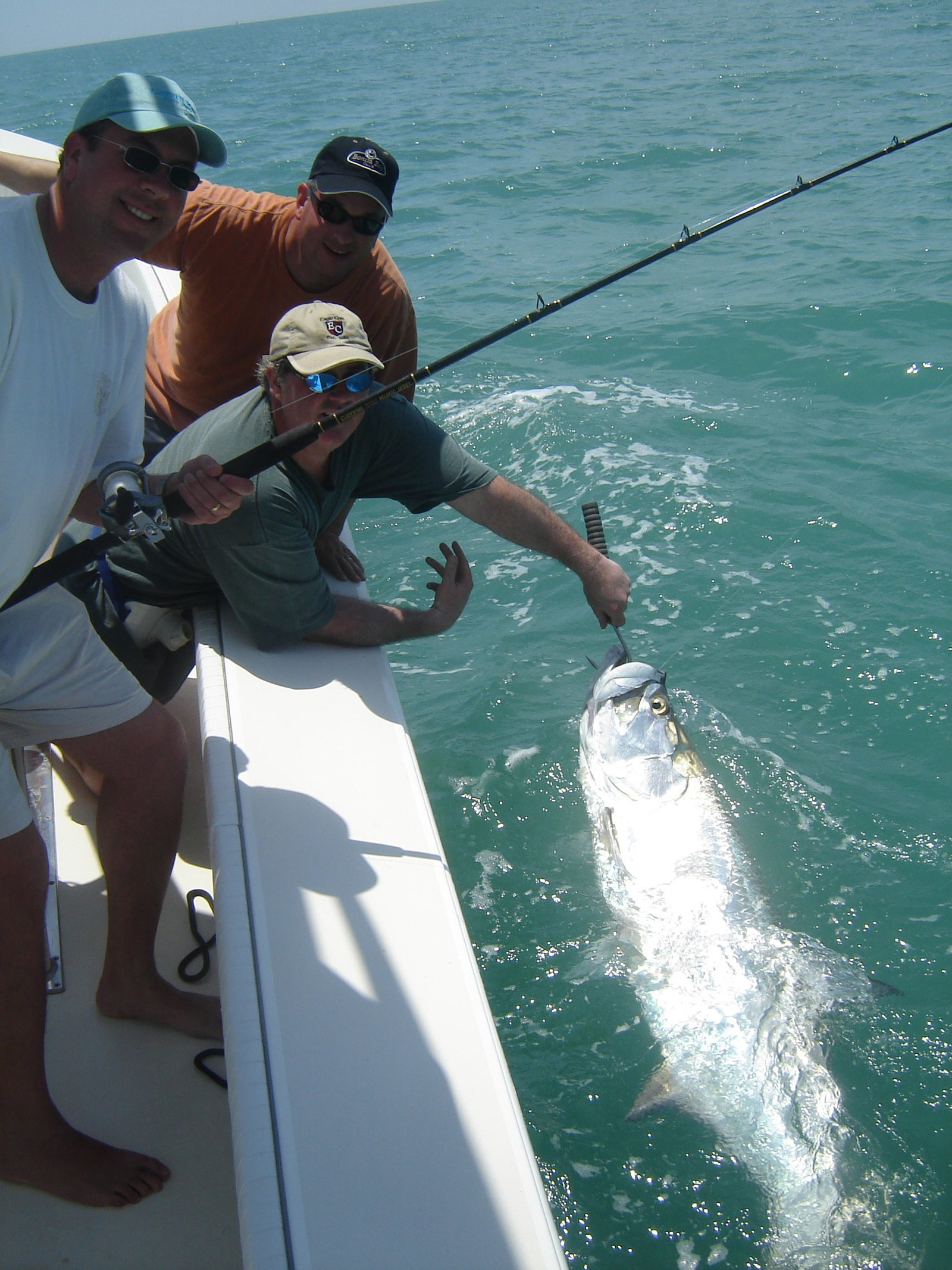 tarpon photo