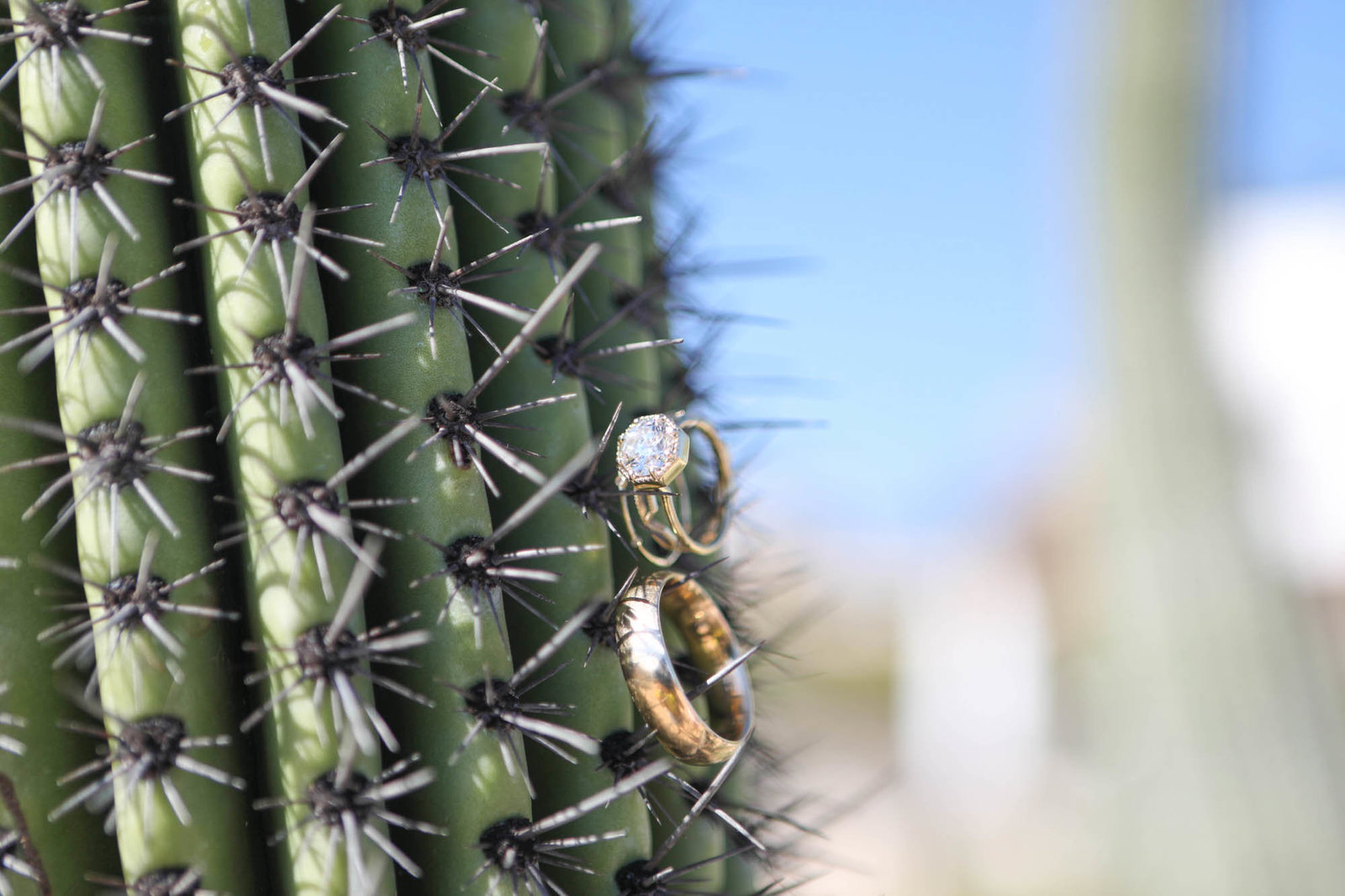 Details shot of ring on Cactus at Destination Wedding in mexico