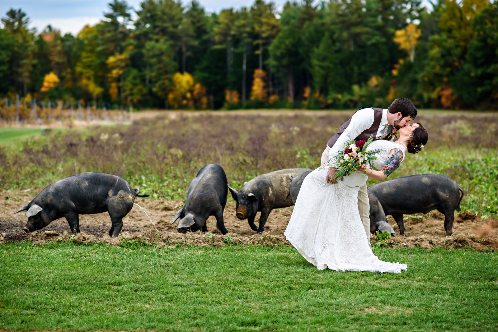 A groom kisses his bride in front of the pigs at this rustic farm wedding.