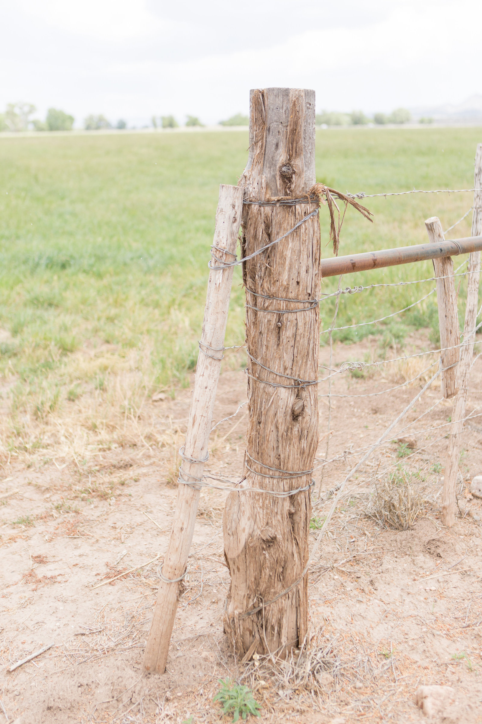 Desert Oasis Wedding  |  Round Lens PhotographyJune2