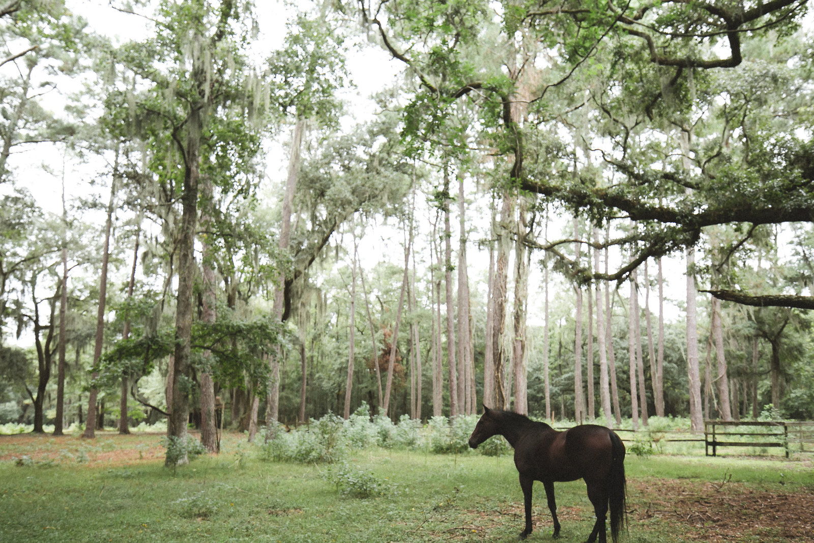 Savannah Georgia - DiBlasio Photo-0157