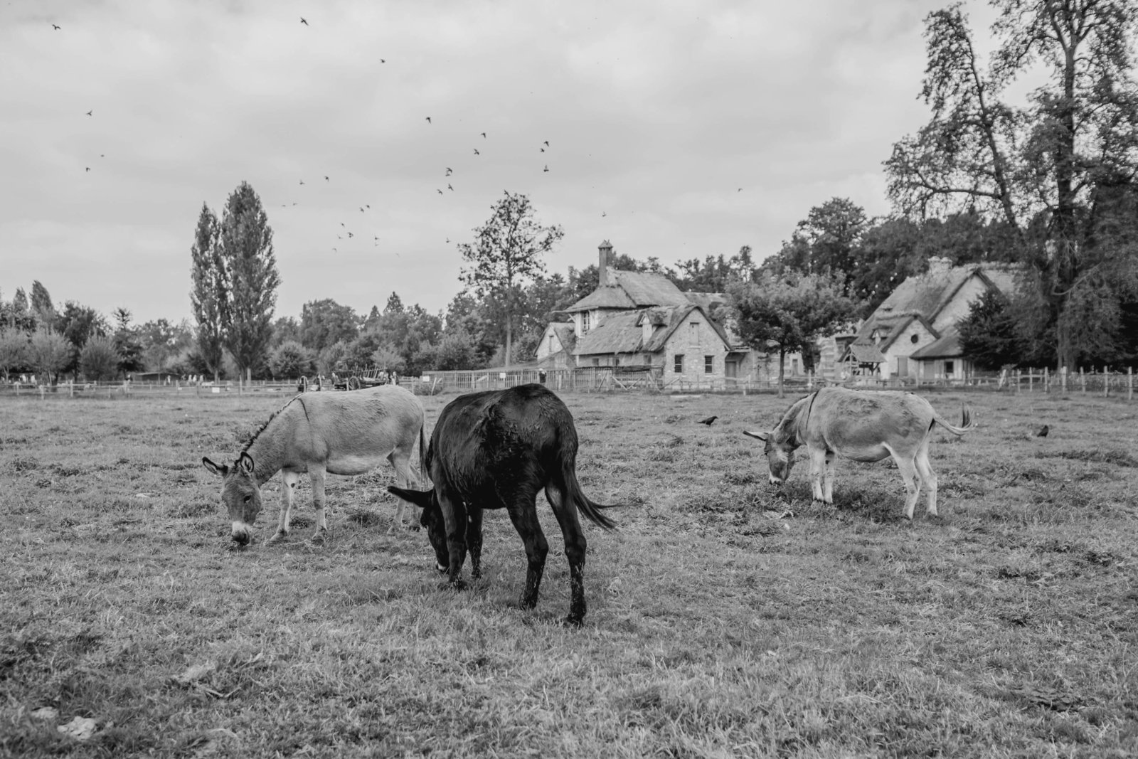 farm-donkey-marie-antoinette-hamlet-versailles-france-travel-destination-kate-timbers-photography-1692