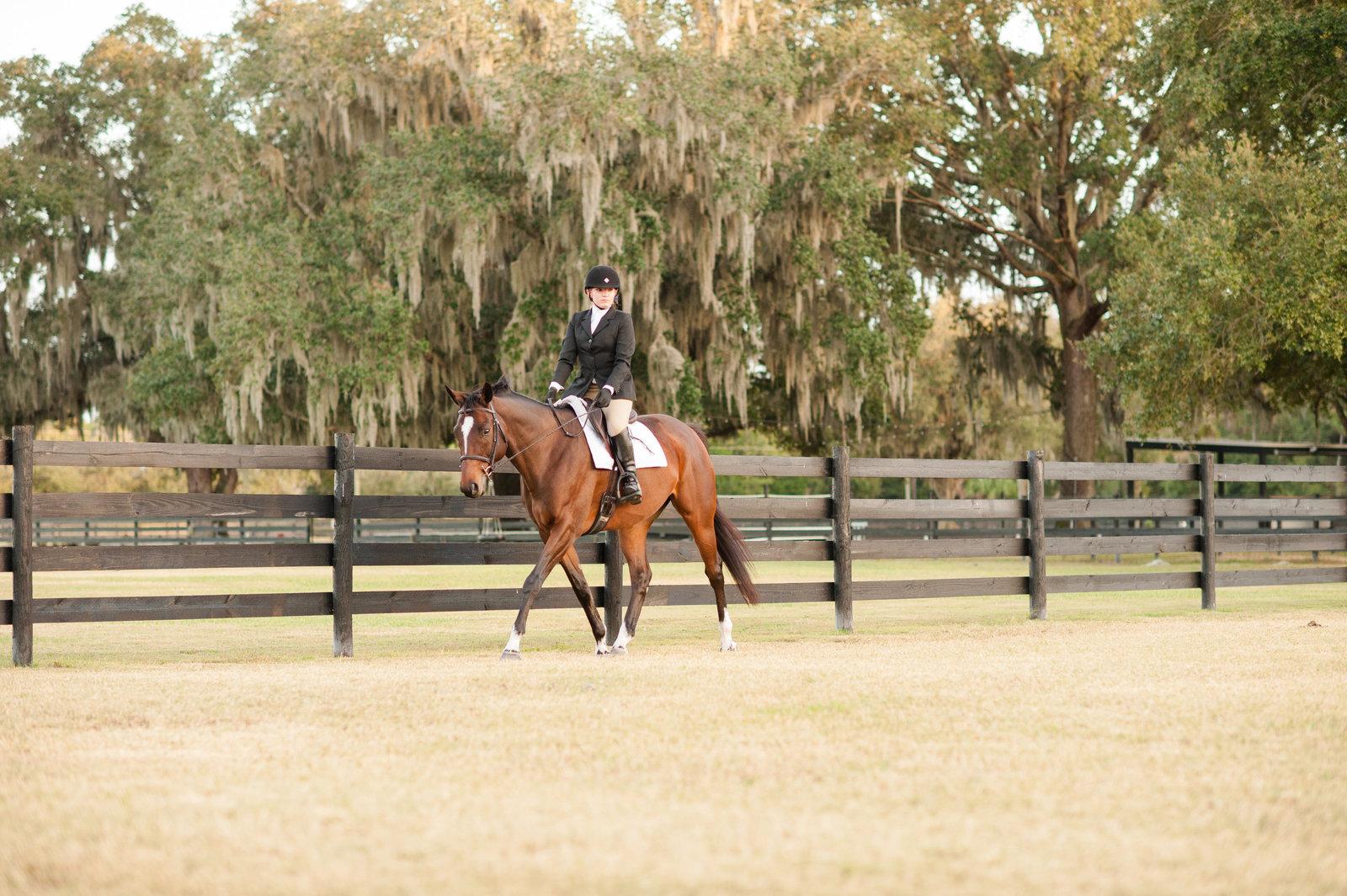 Horse Pictures Orlando