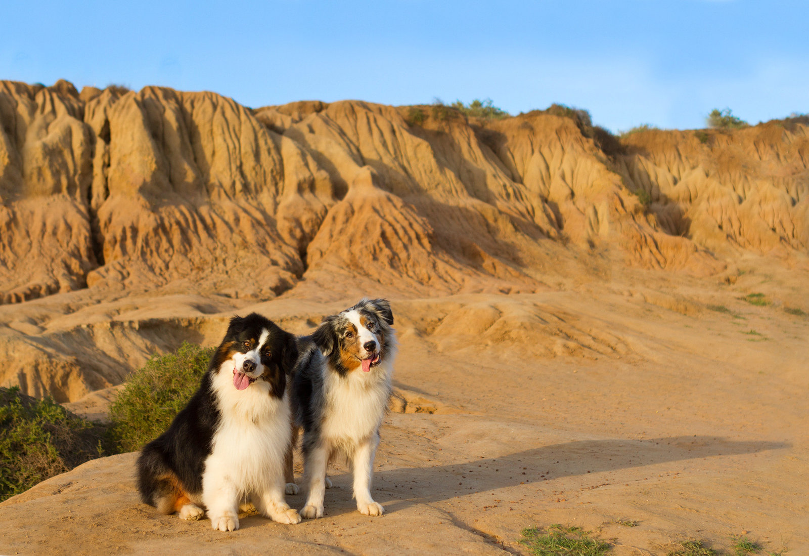 Dogs in nature in San Diego, CA