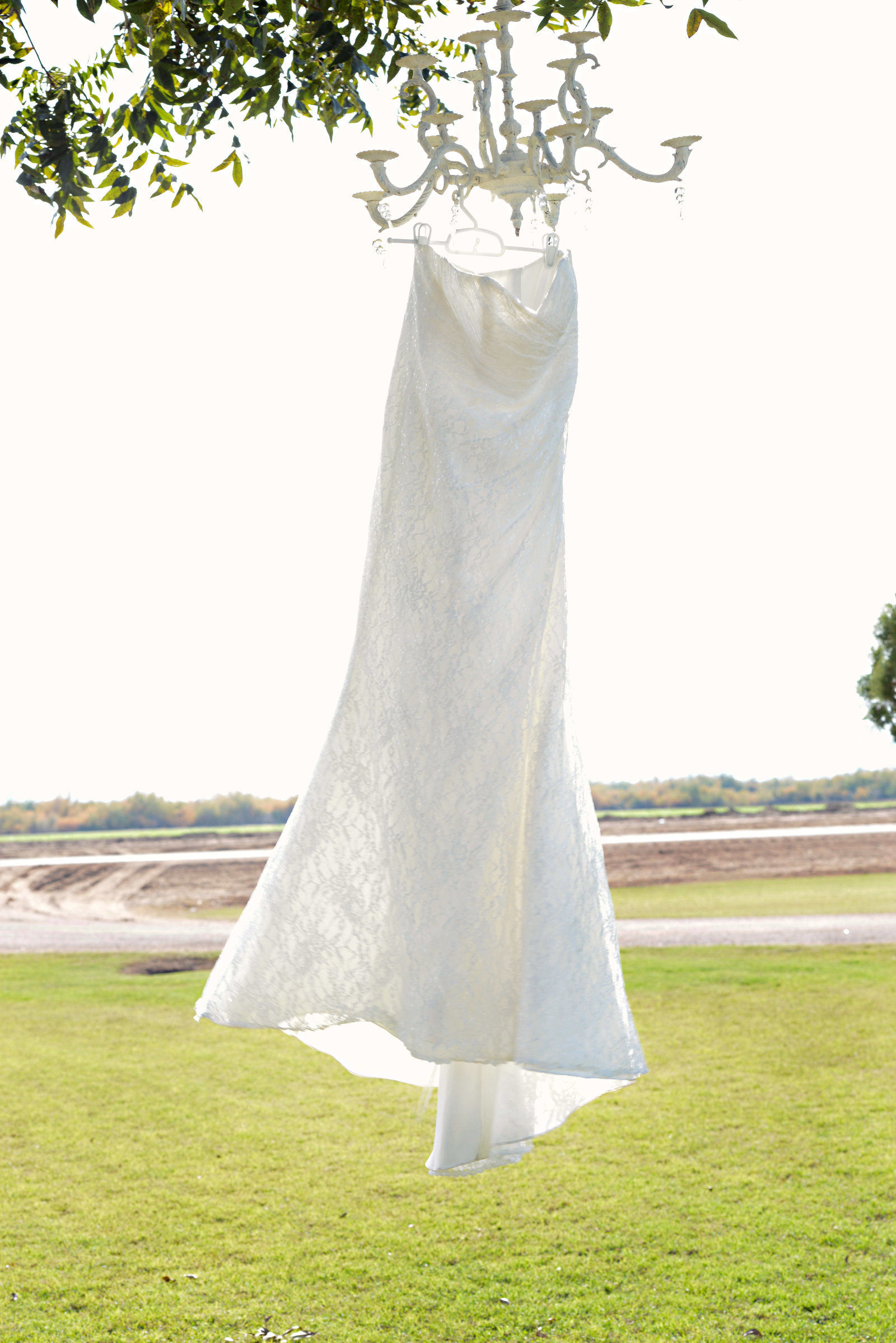 wedding dress hanging from a tree in Roll Arizona