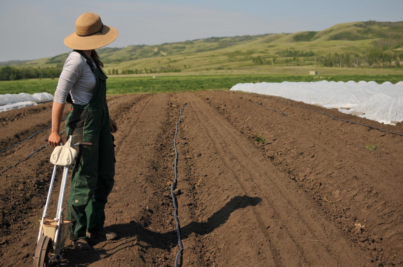 Lisa Lundgard Farmer CSA Garden Peace River by Melissa E Earle