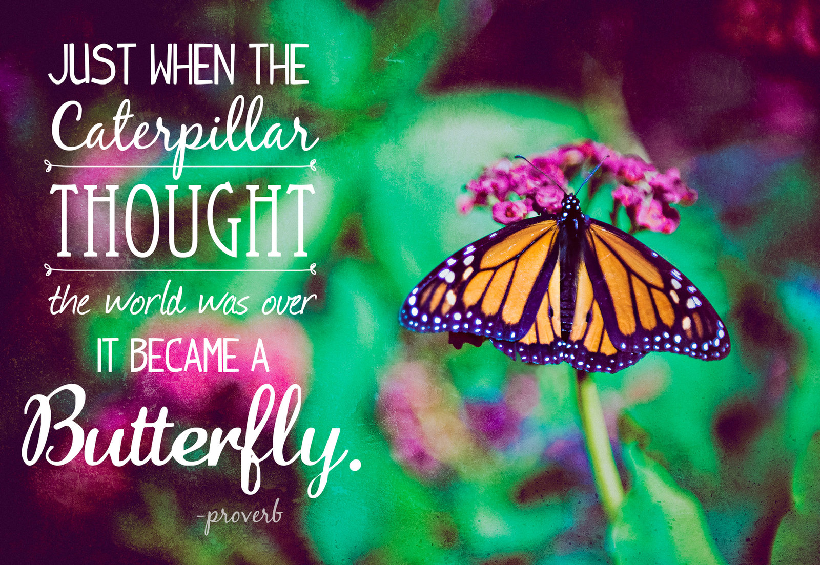 Butterfly macro photography with caterpillar quote