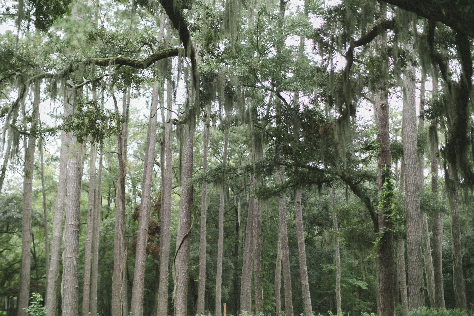 Savannah Georgia - DiBlasio Photo-0120