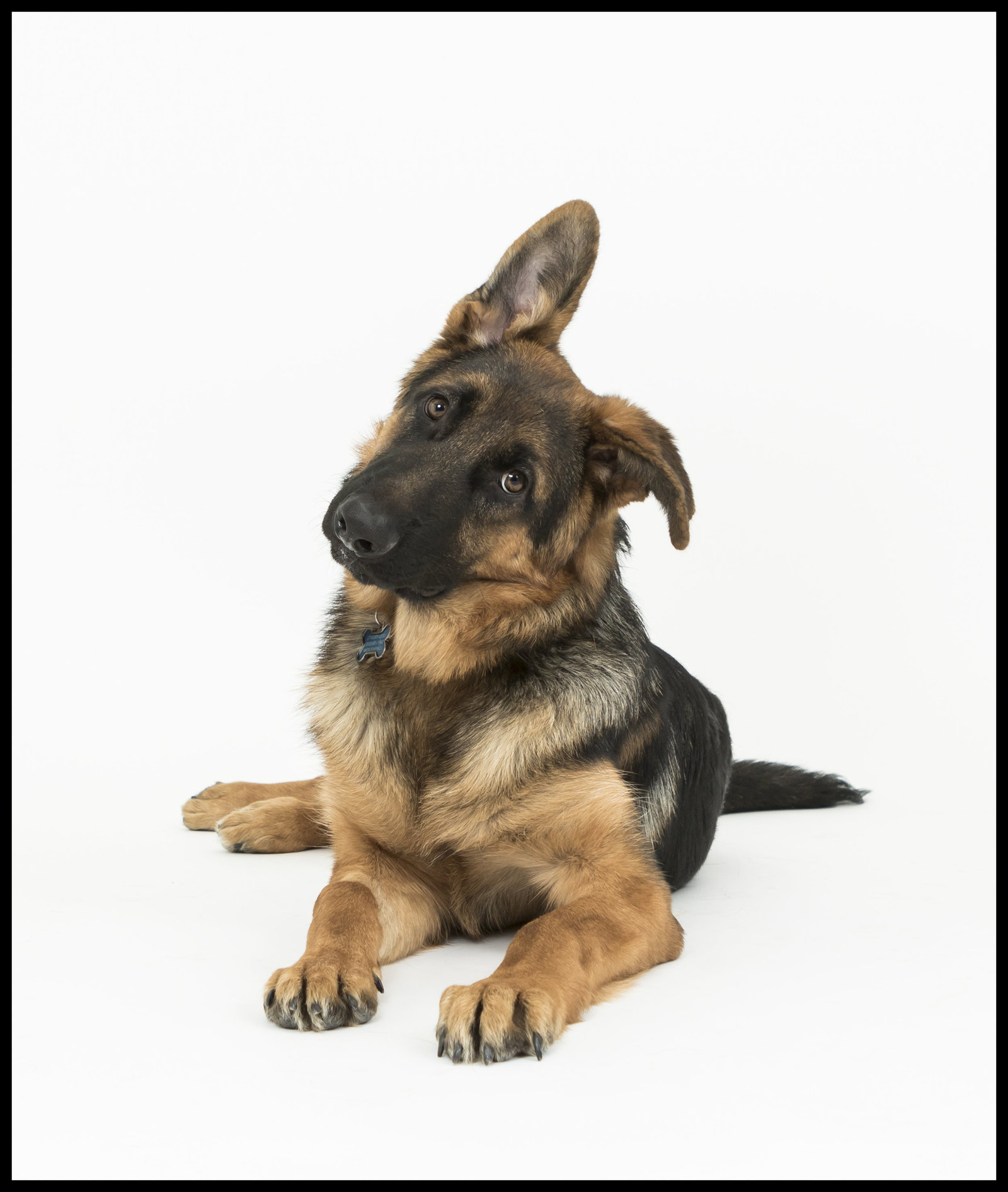 San Diego's best studio pet photographer