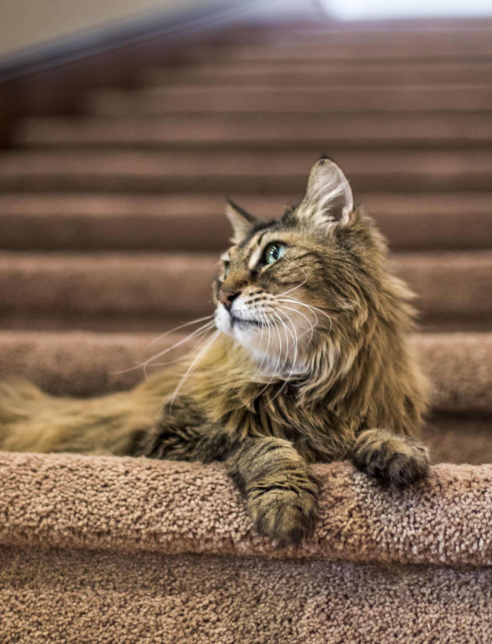 san_diego_cat_photographer_2
