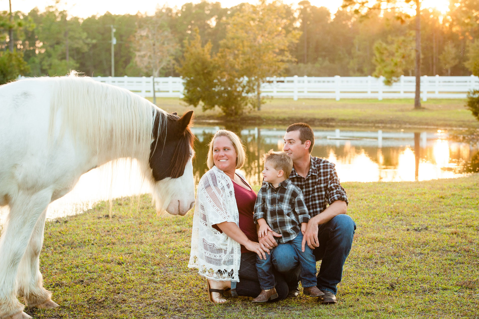 Port Orange horse portraits