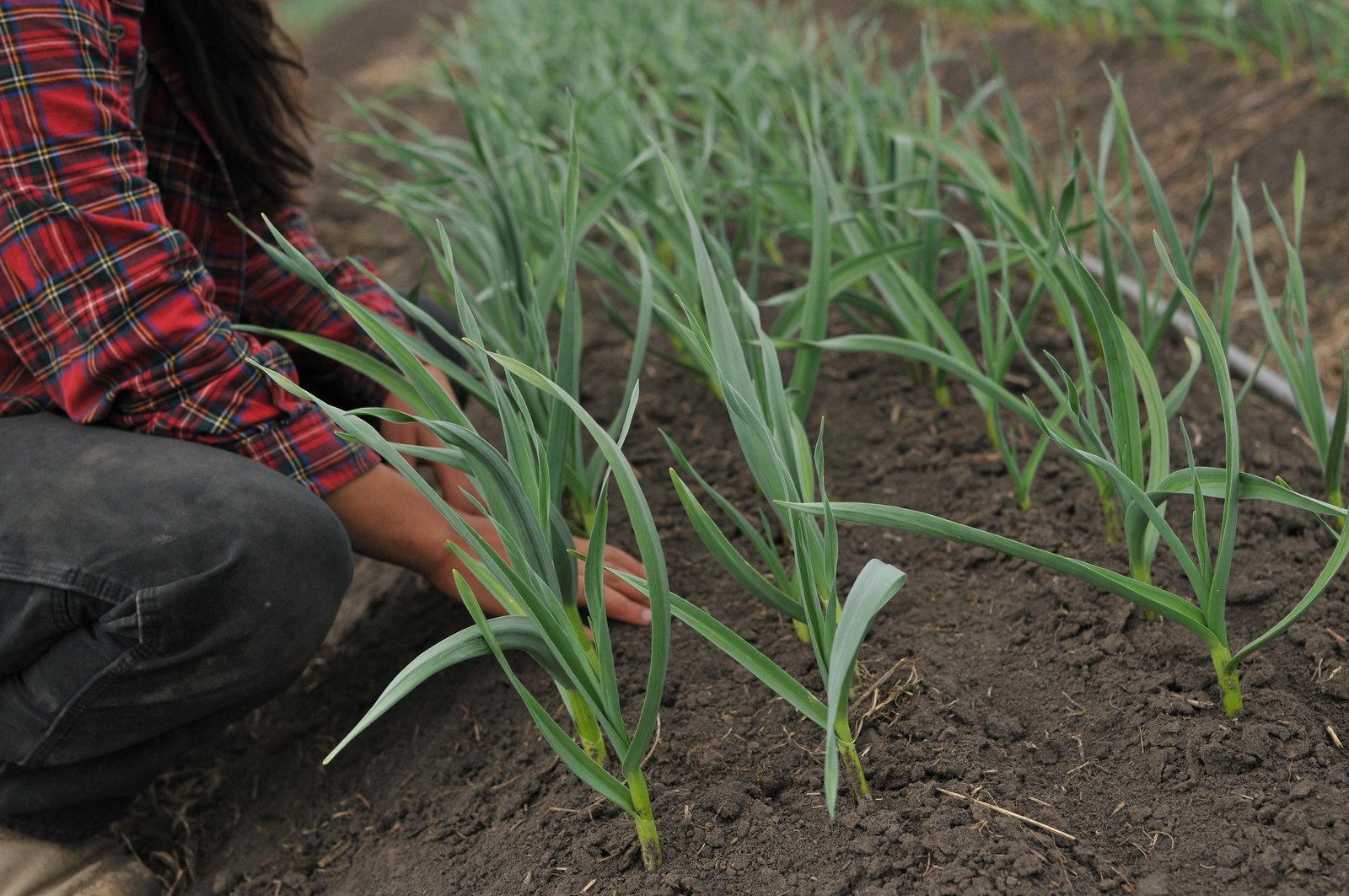 Skyla Farmer Veggie Patch Farm CSA Garden by Melissa E Earle Mee