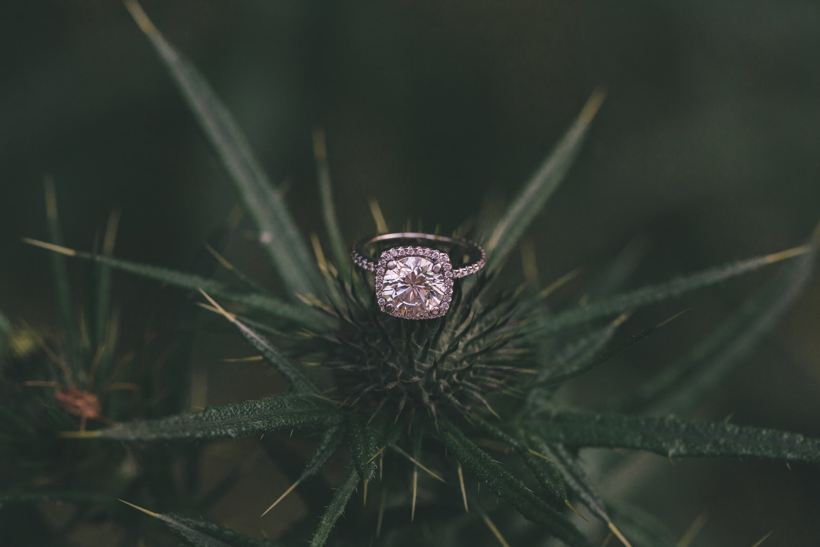 rockcliffe.park.engagement-22