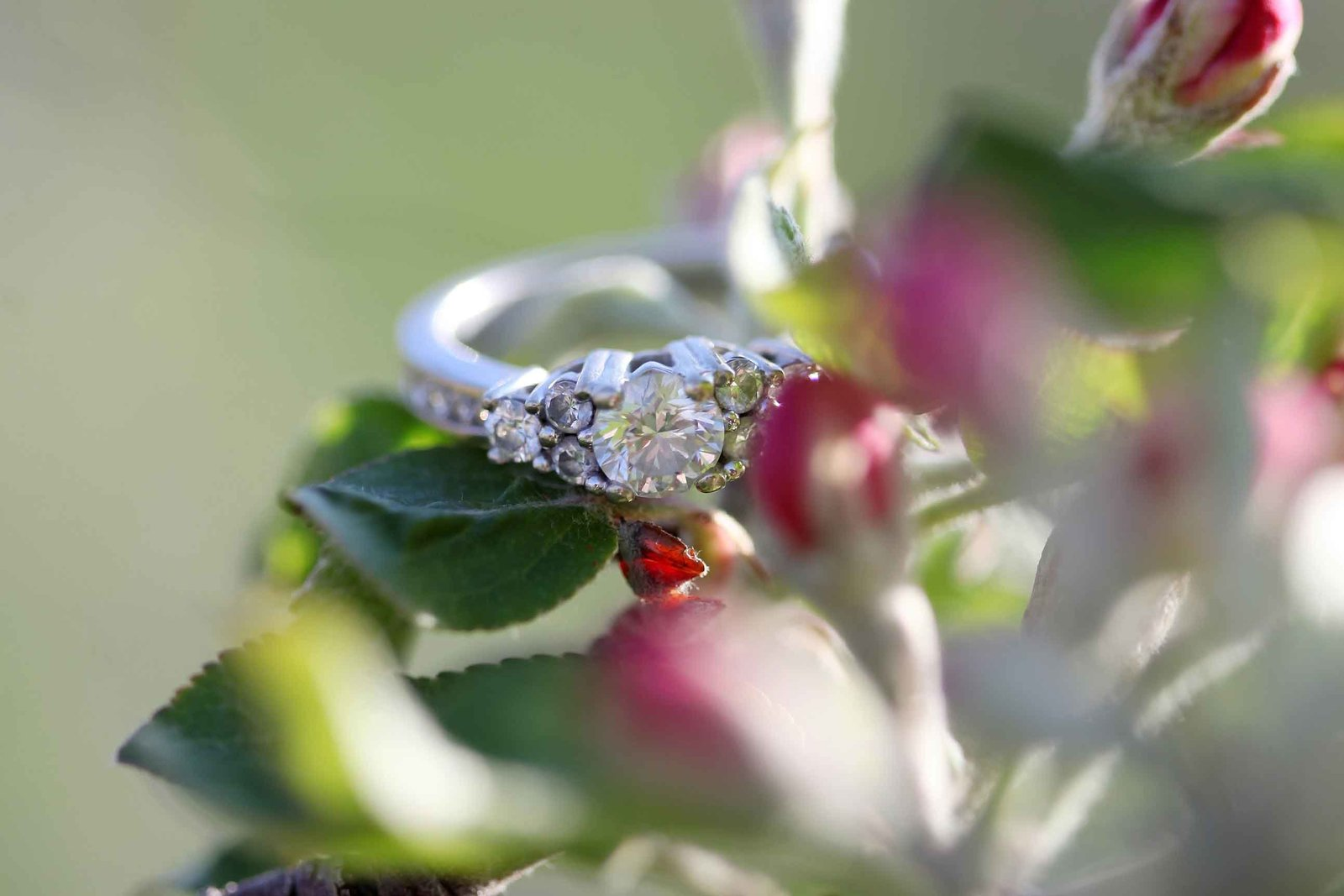 TRACEY_LYNNE_PHOTOGRAPHY_OTTAWA_WEDDINGS_RINGS_SPRING_FLOWERS