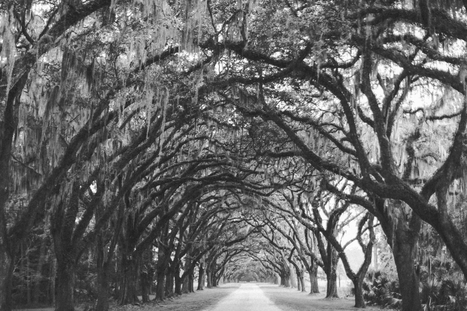 Savannah Georgia - DiBlasio Photo-0106
