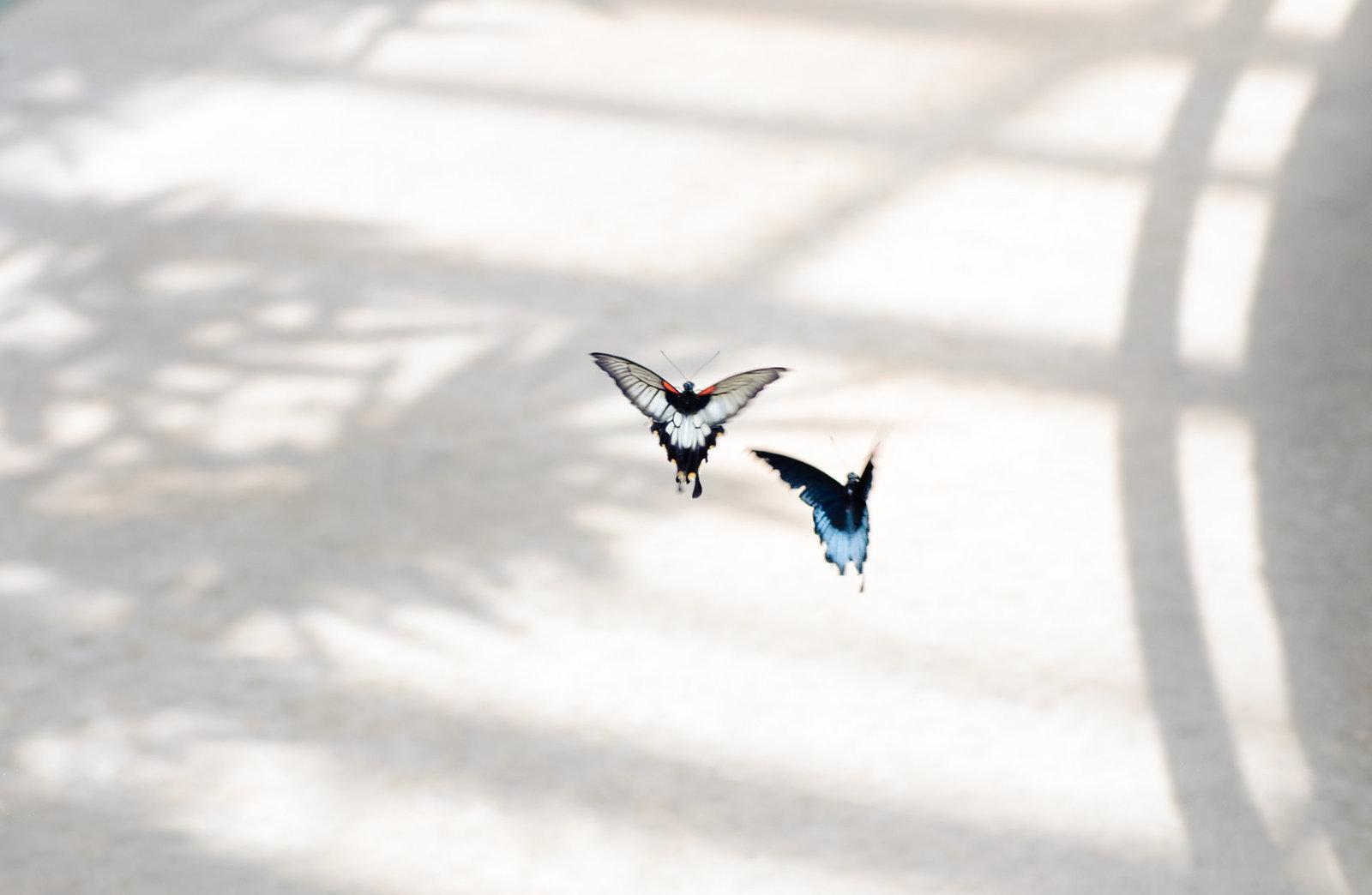 Blocker_150619_1203-Butterflies-Confidence