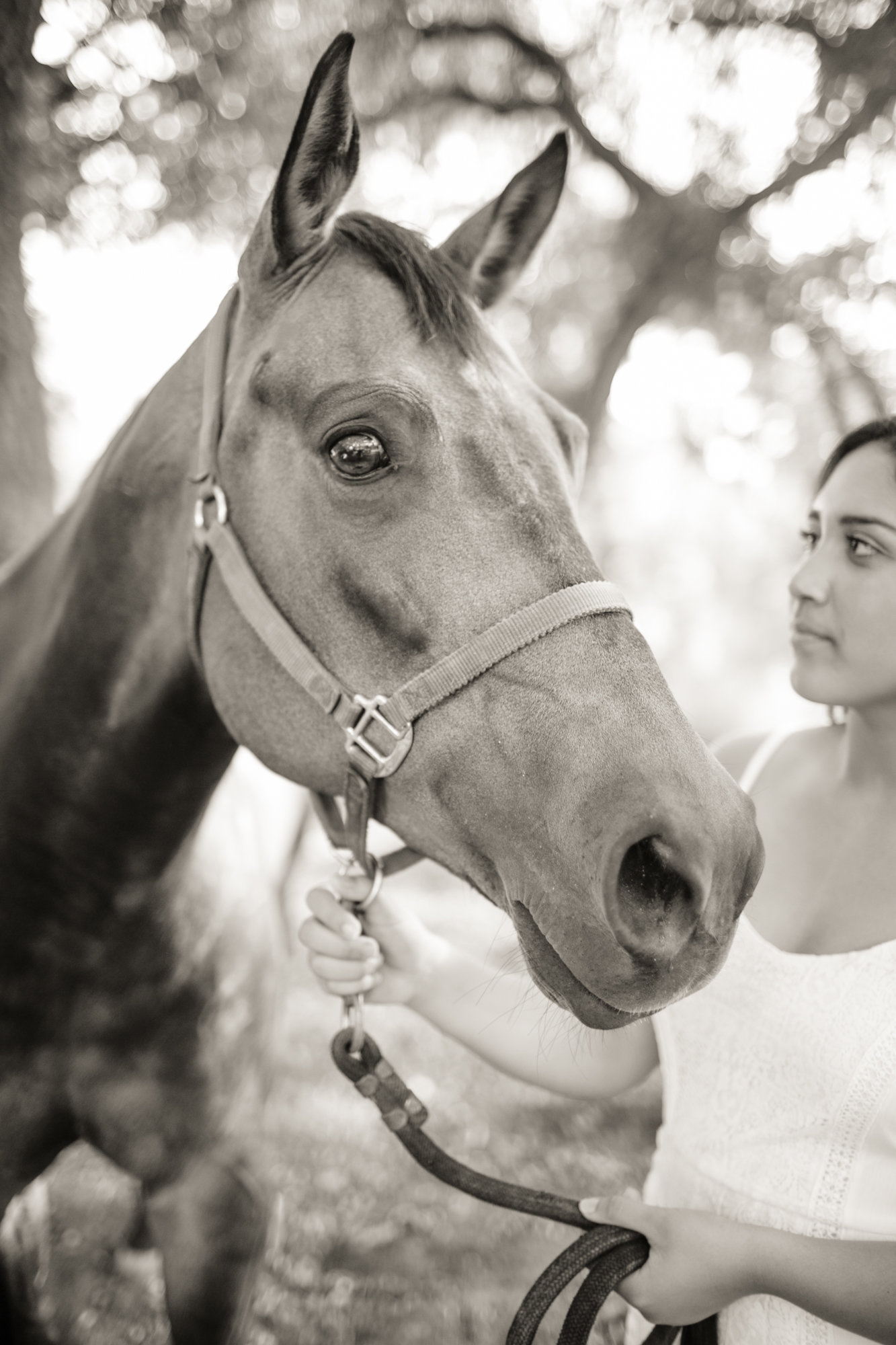 Horses_Portrait_Session_Lily_Ro_Photography-3289