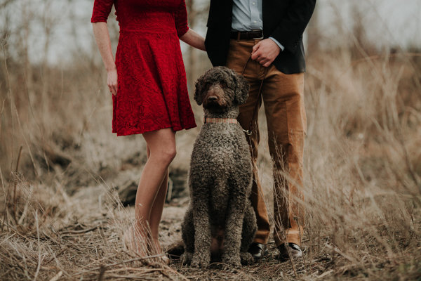 an engagment session with a labradoodle