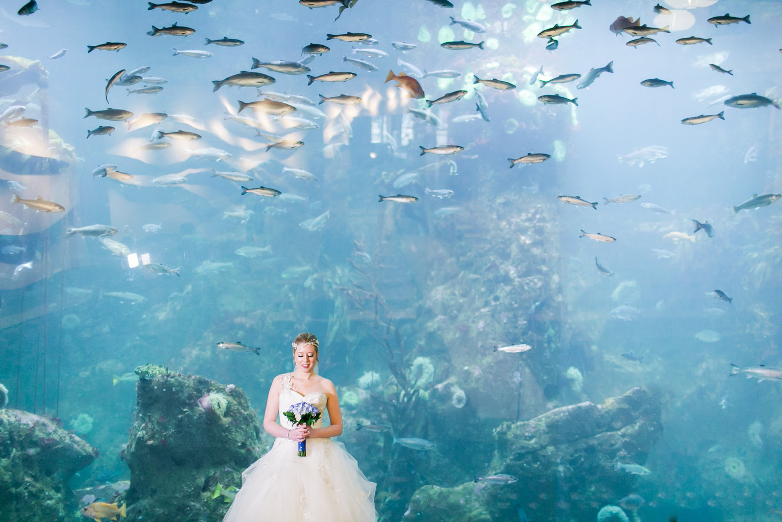 michael-jody-seattle-aquarium-wedding451435