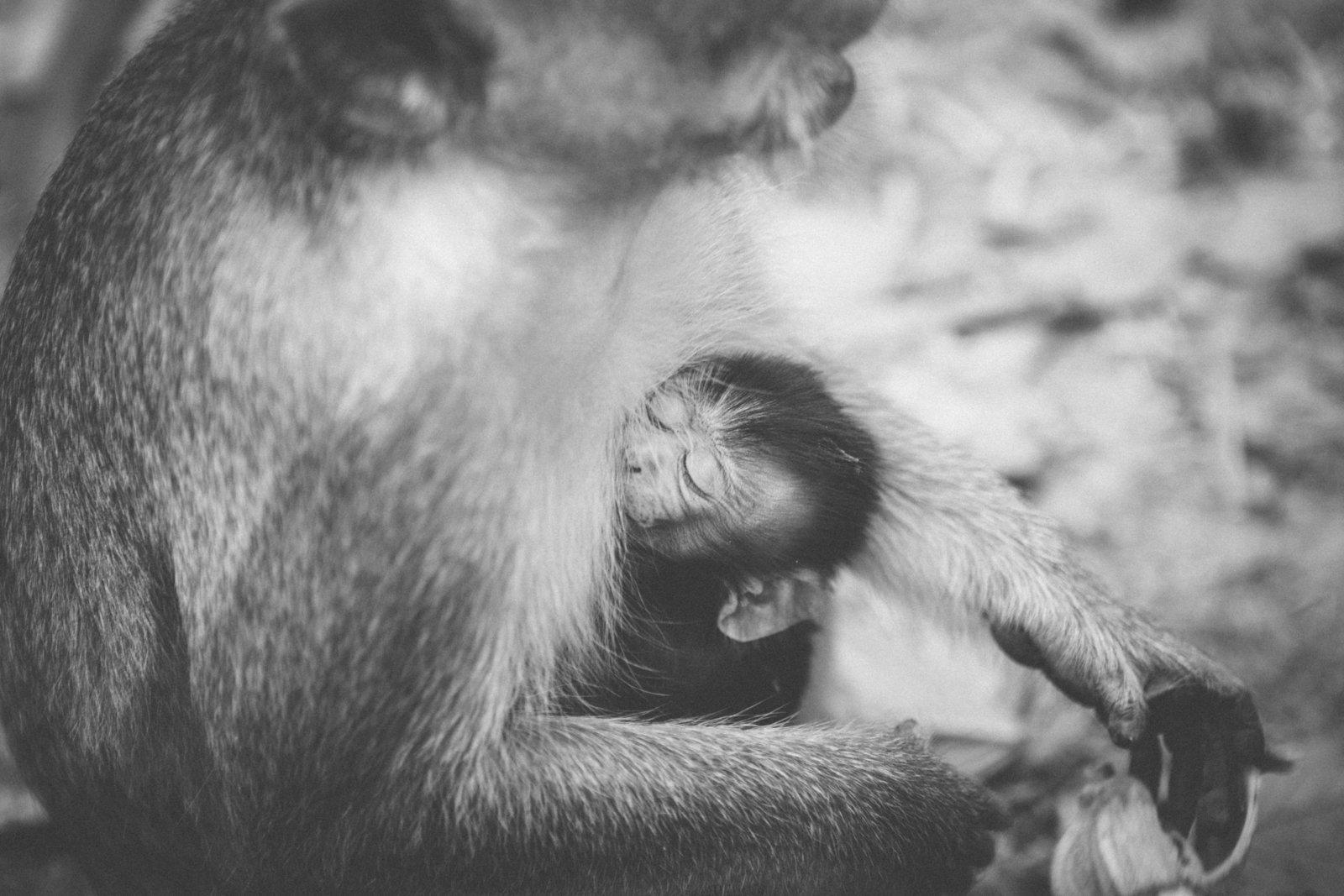 Monkeys-18