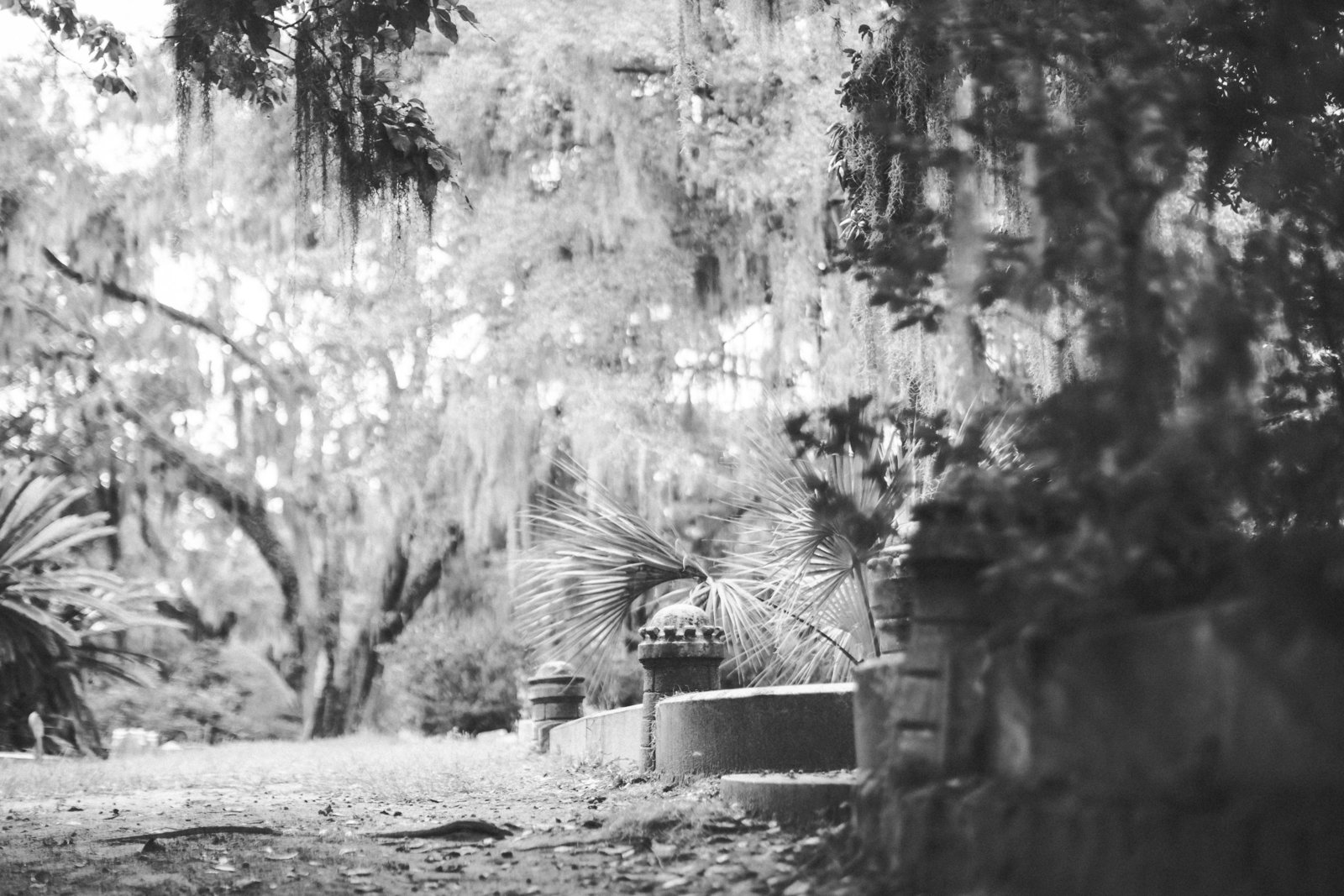 Savannah Georgia - DiBlasio Photo-2239